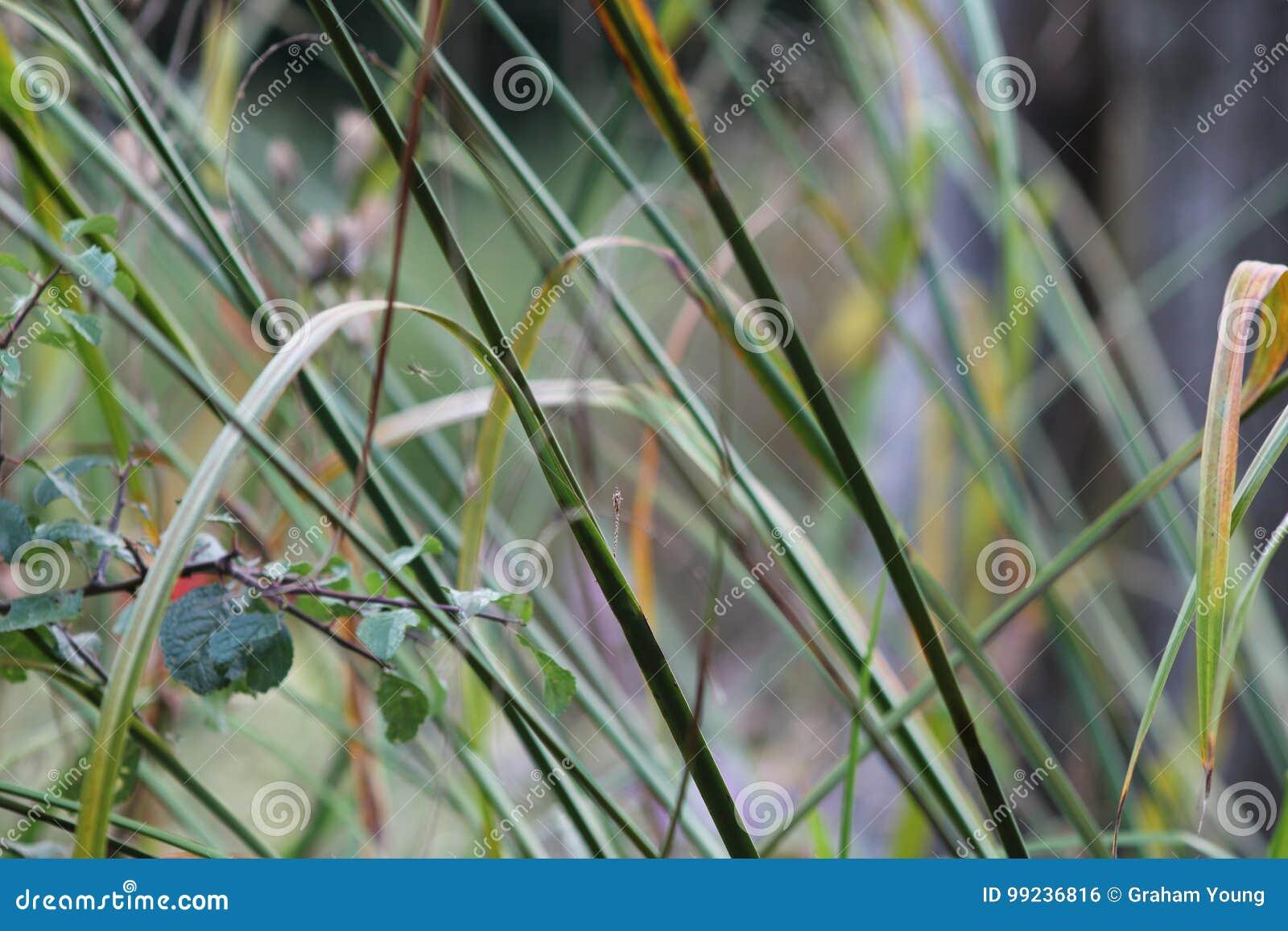Gräser im englischen Garten, Nahaufnahme, mit Lavendel und kleinen flowes 3
