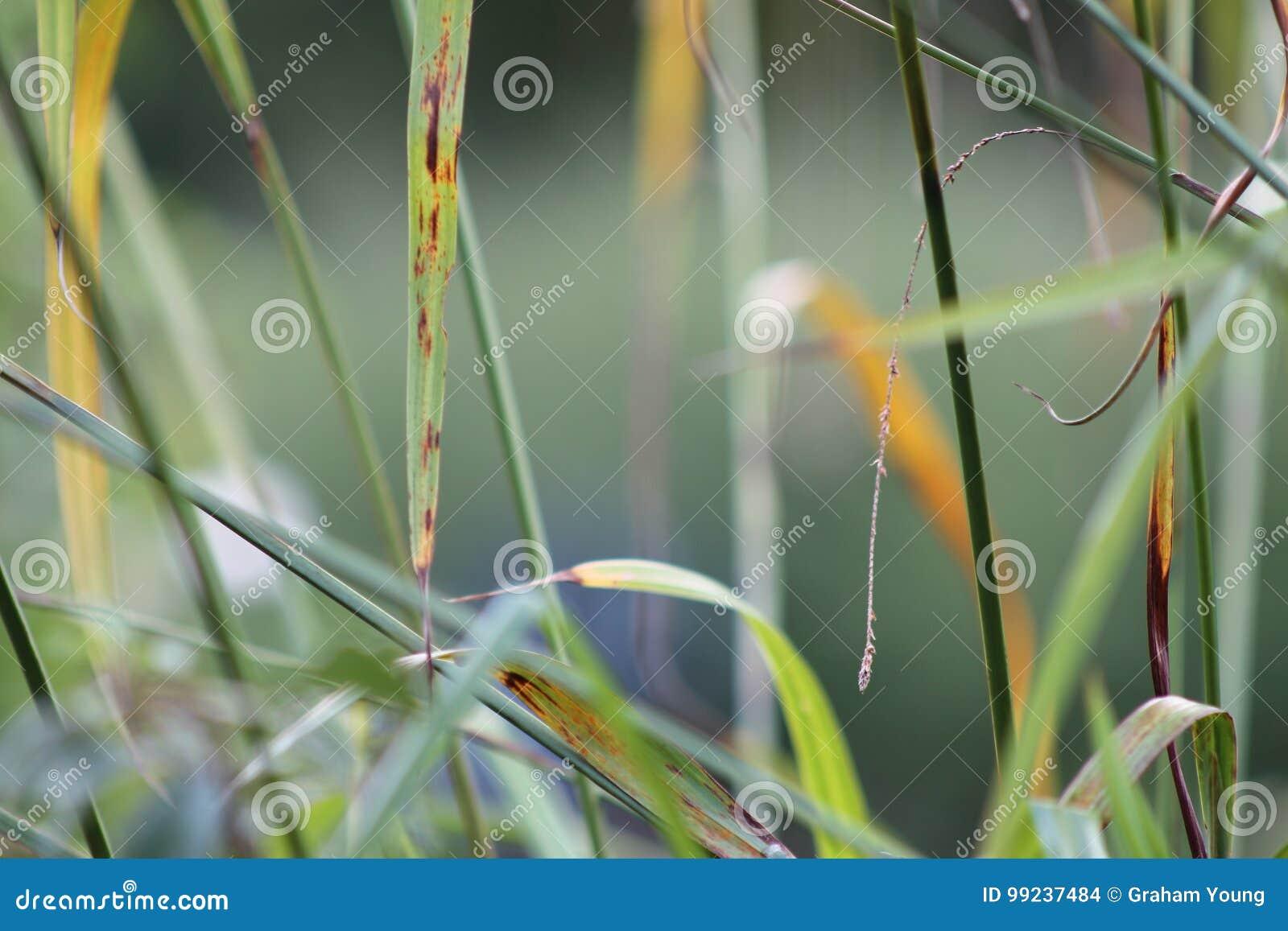 Gräser im englischen Garten, Nahaufnahme, mit Lavendel und kleinen flowes 7