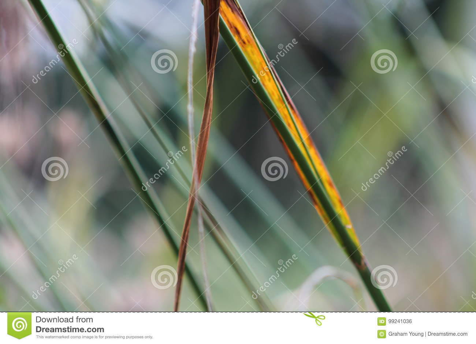 Gräser im englischen Garten, Nahaufnahme, mit Lavendel und kleinen flowes 9