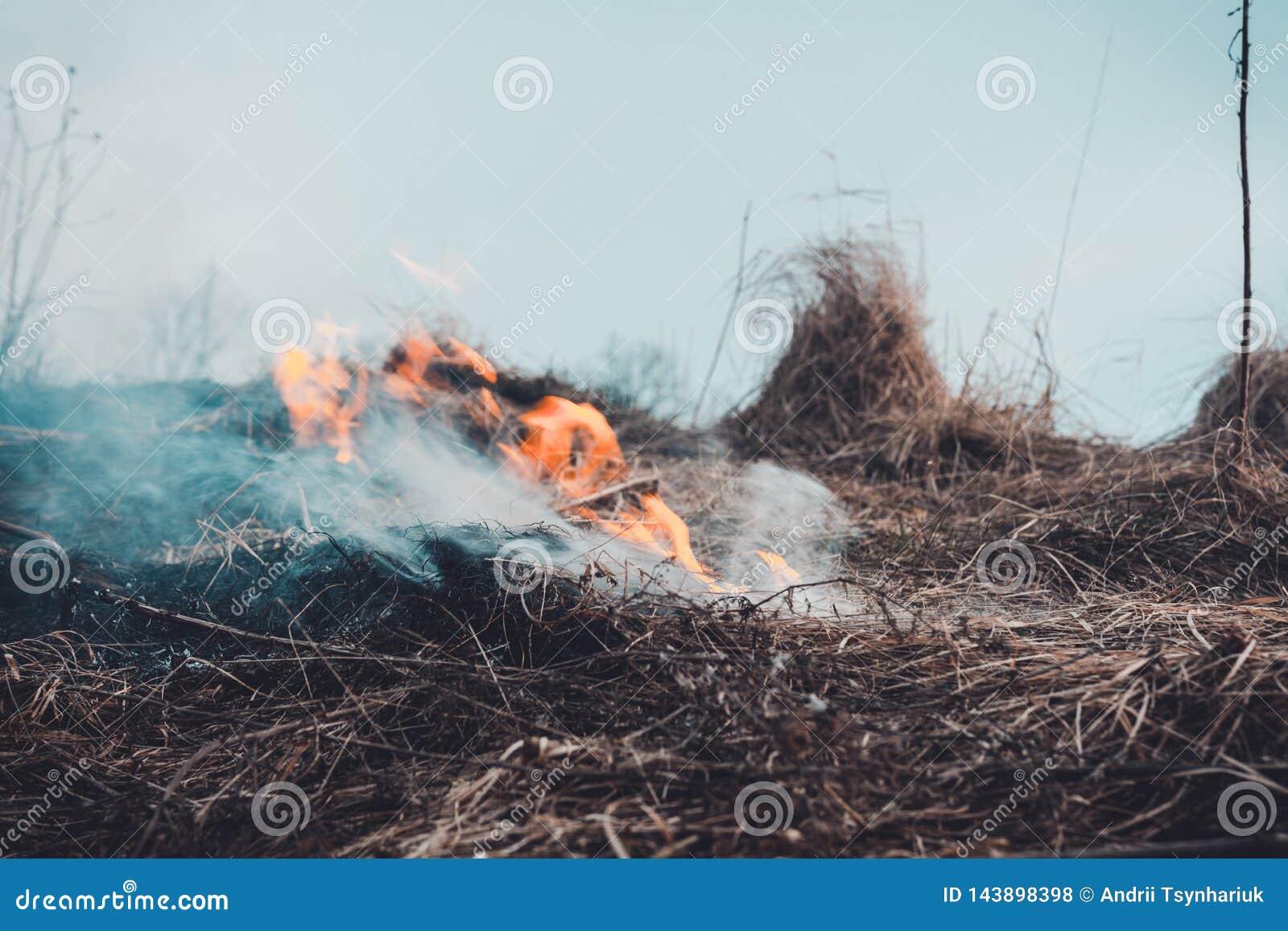Gräset bränner, branden av som förstör allt i dess bana