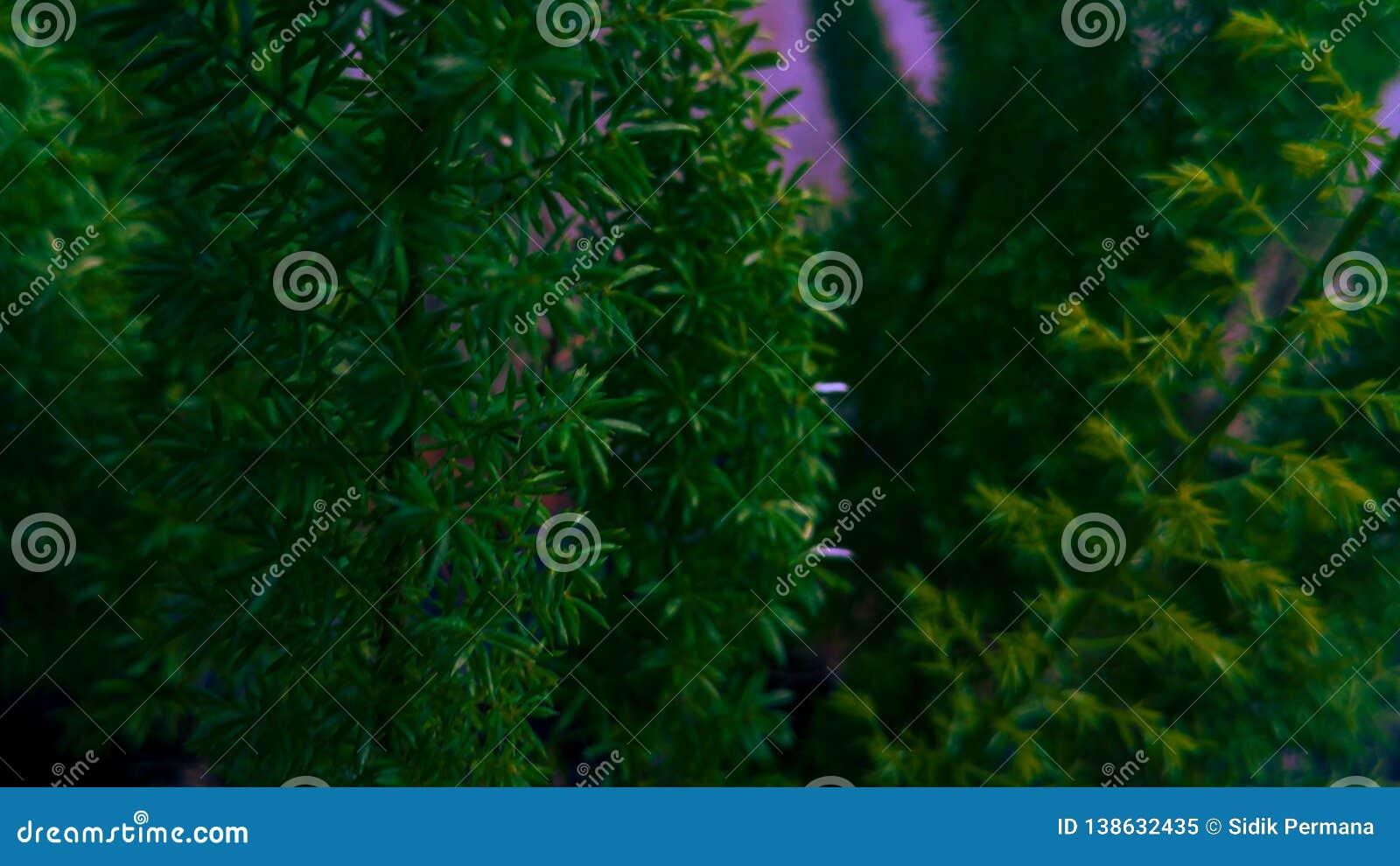 Gräshoppa eller gräshoppa på gröna sidor