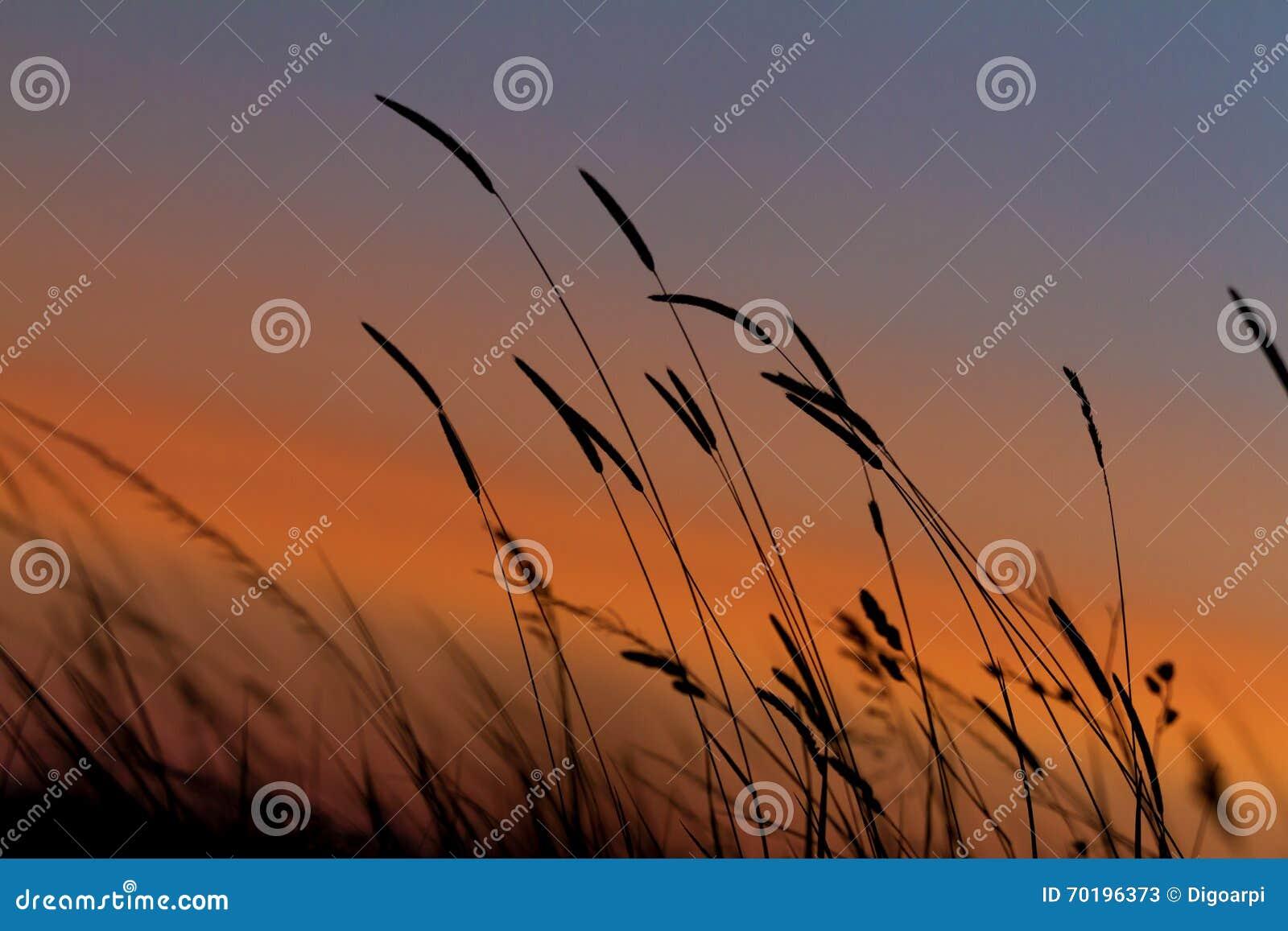 Gräslandskap