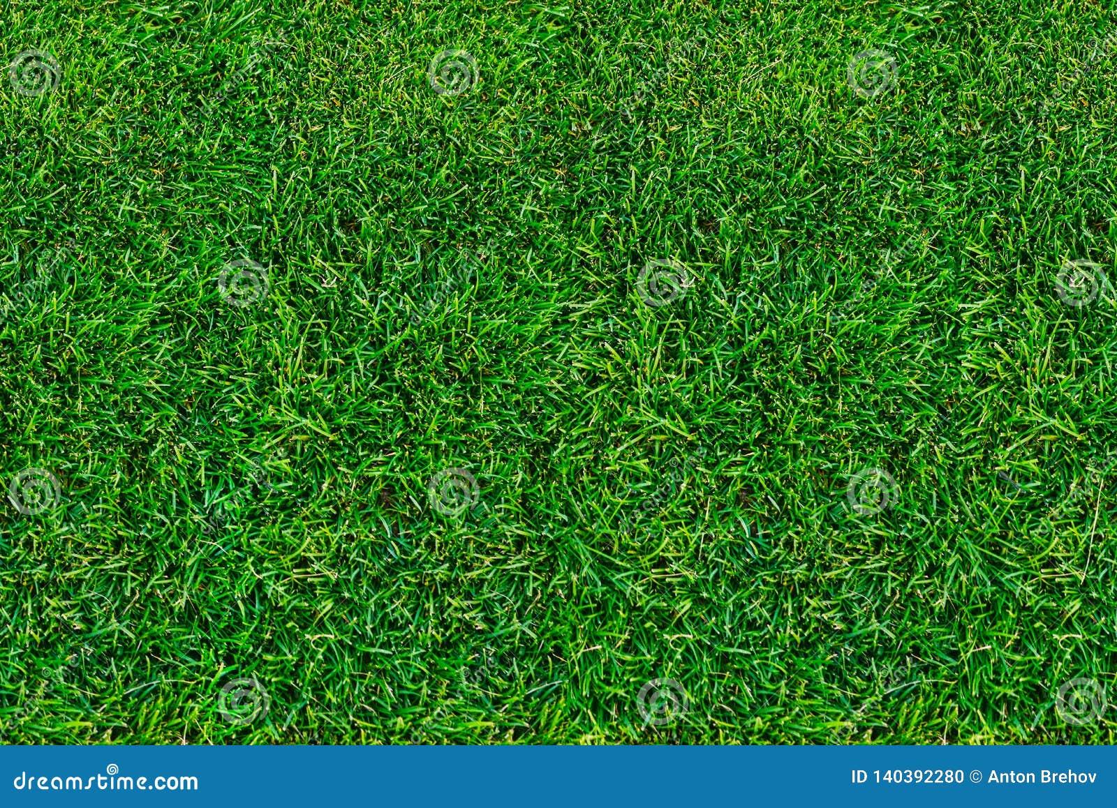 Gräsmatta grönt gräs i sommar ovanför sikt närbild naturlig bakgrund