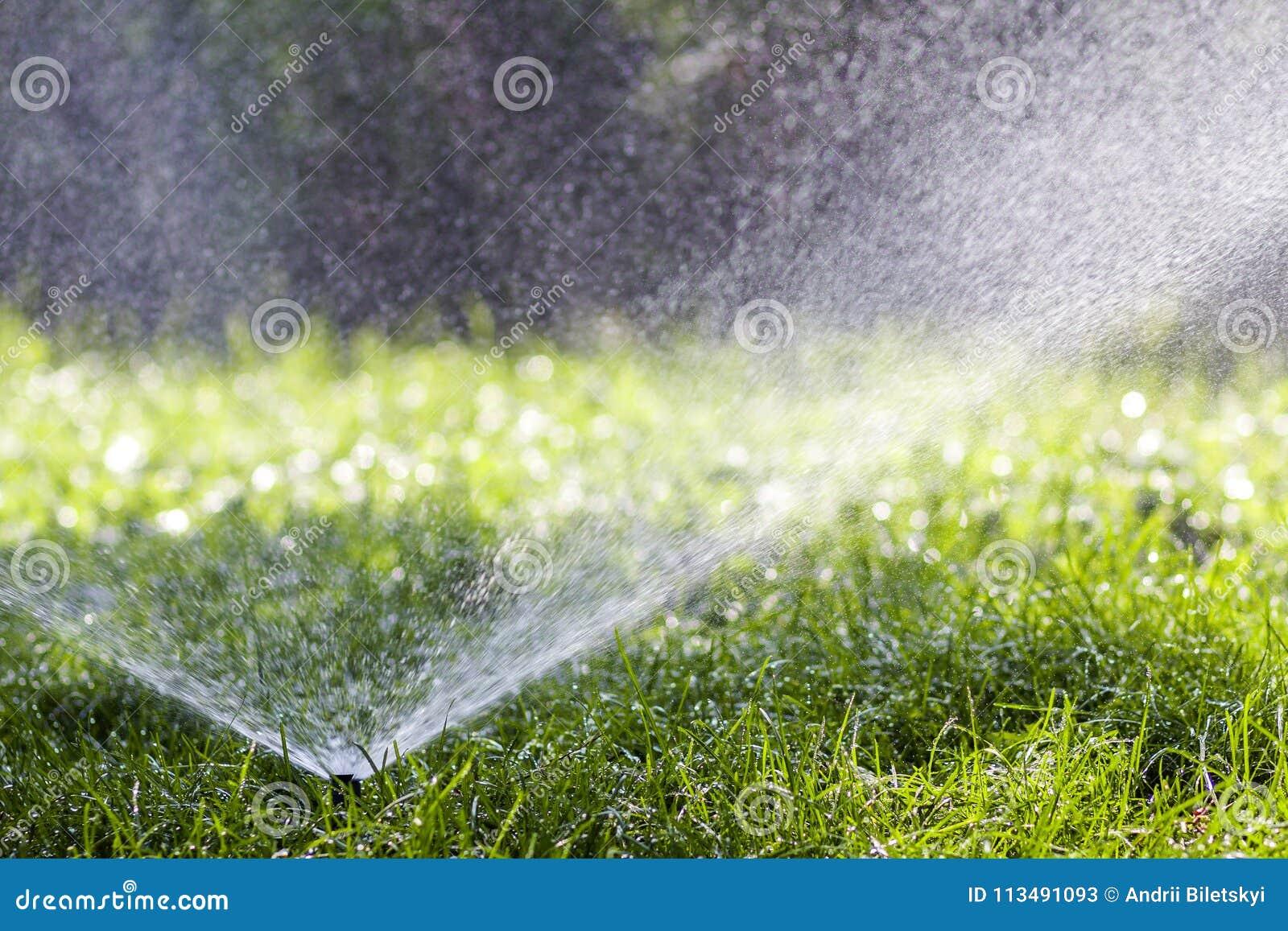 Gräsmattavattenspridare som besprutar vatten över gräs i trädgård på en varm sommardag Automatiska bevattna gräsmattor Arbeta i t