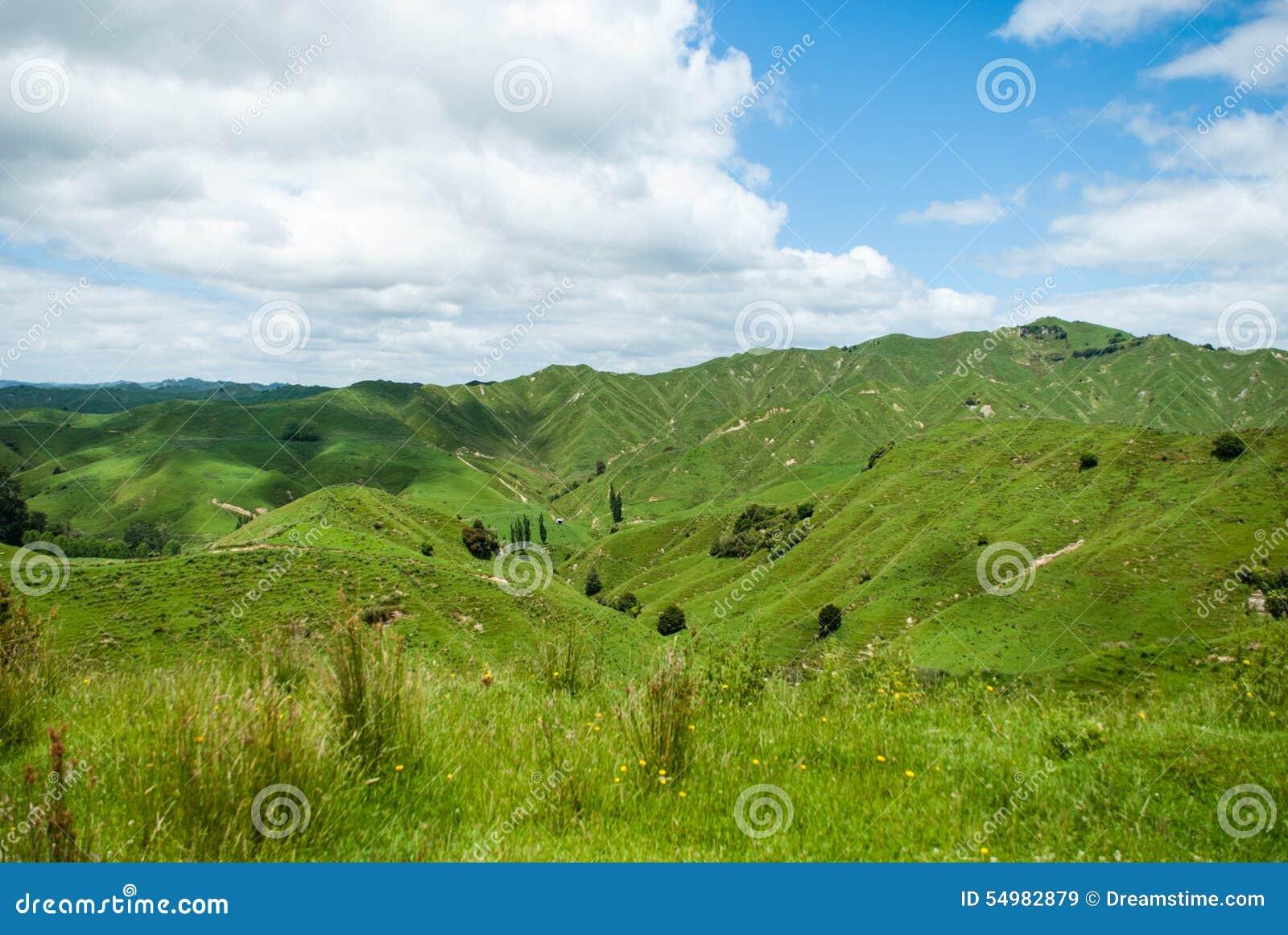 Gräsplan så långt som öga kan se