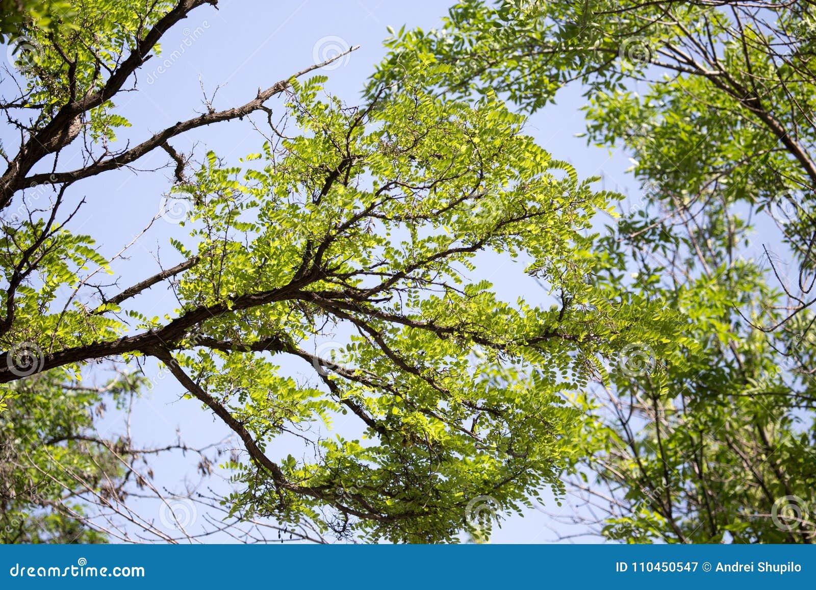 Gräsplansidor på trädet i natur
