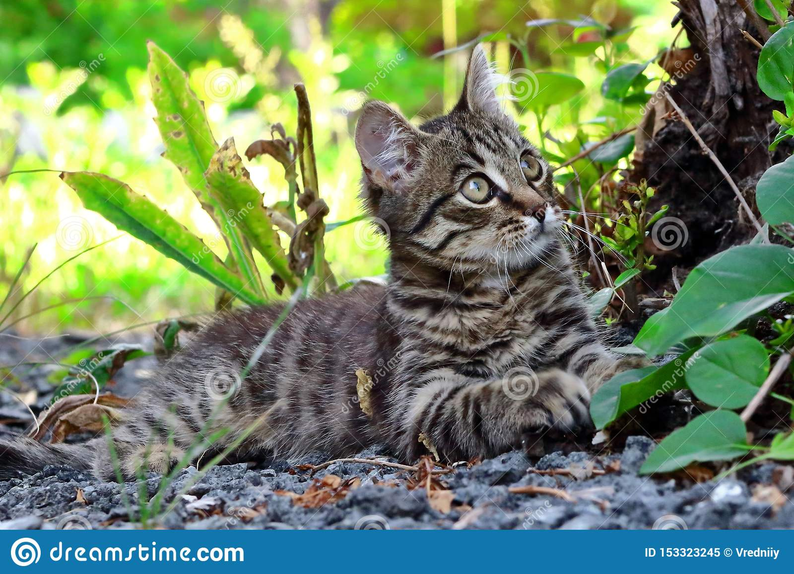 Grå kattunge som ner ligger under ett träd