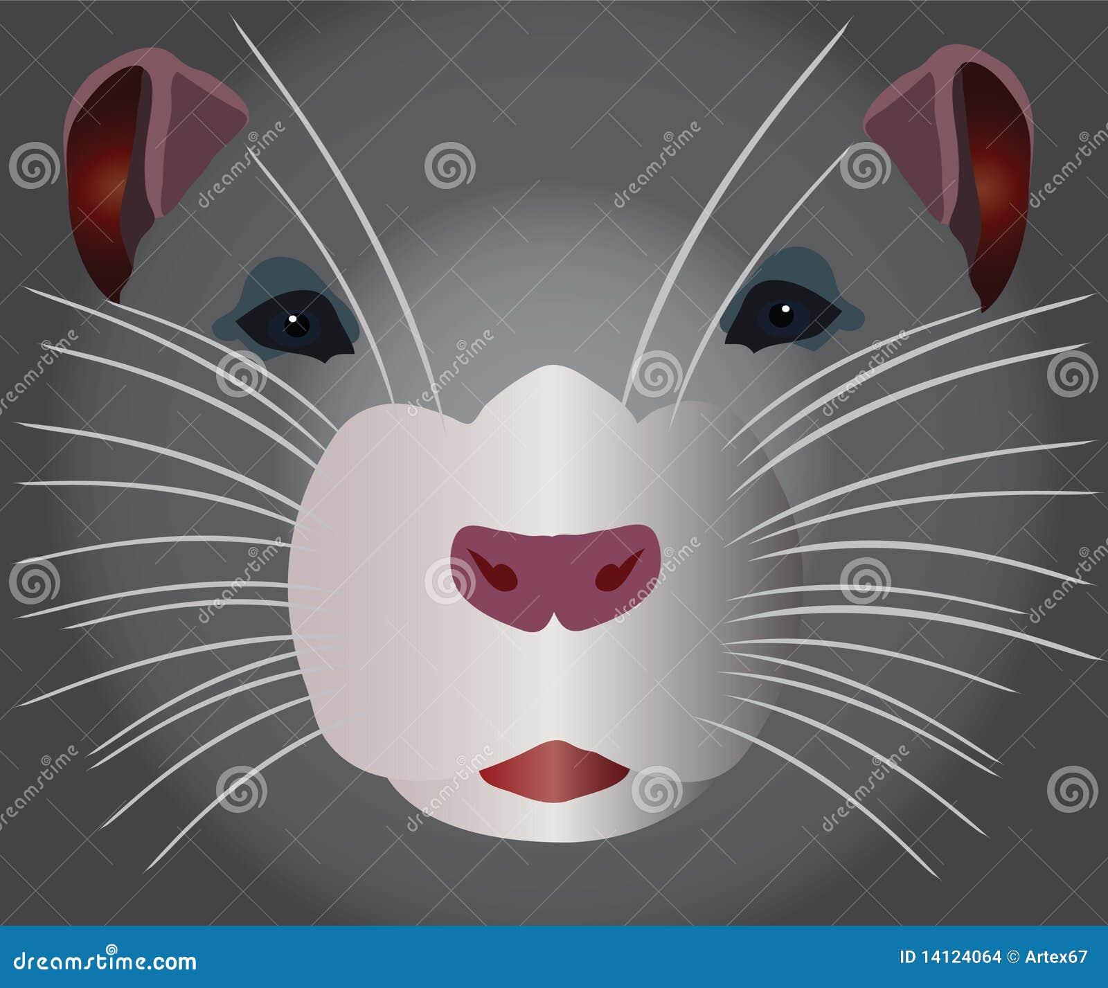 Grå rodent