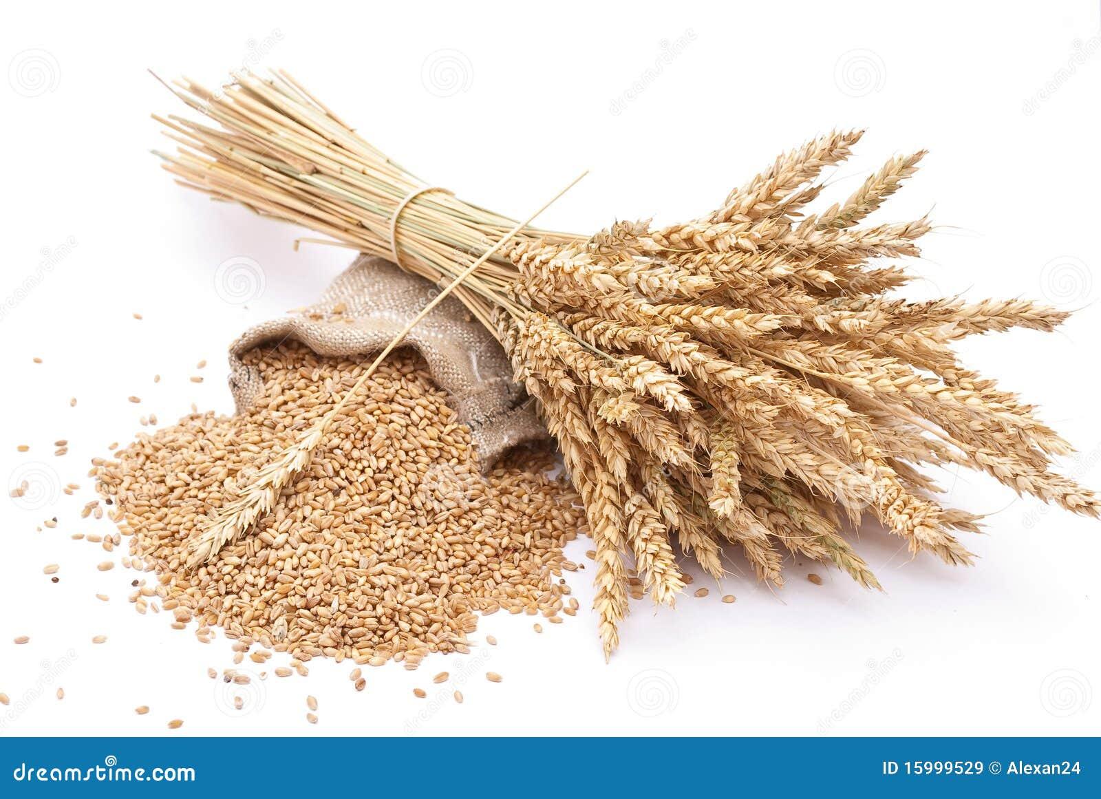 Grões e orelhas do trigo