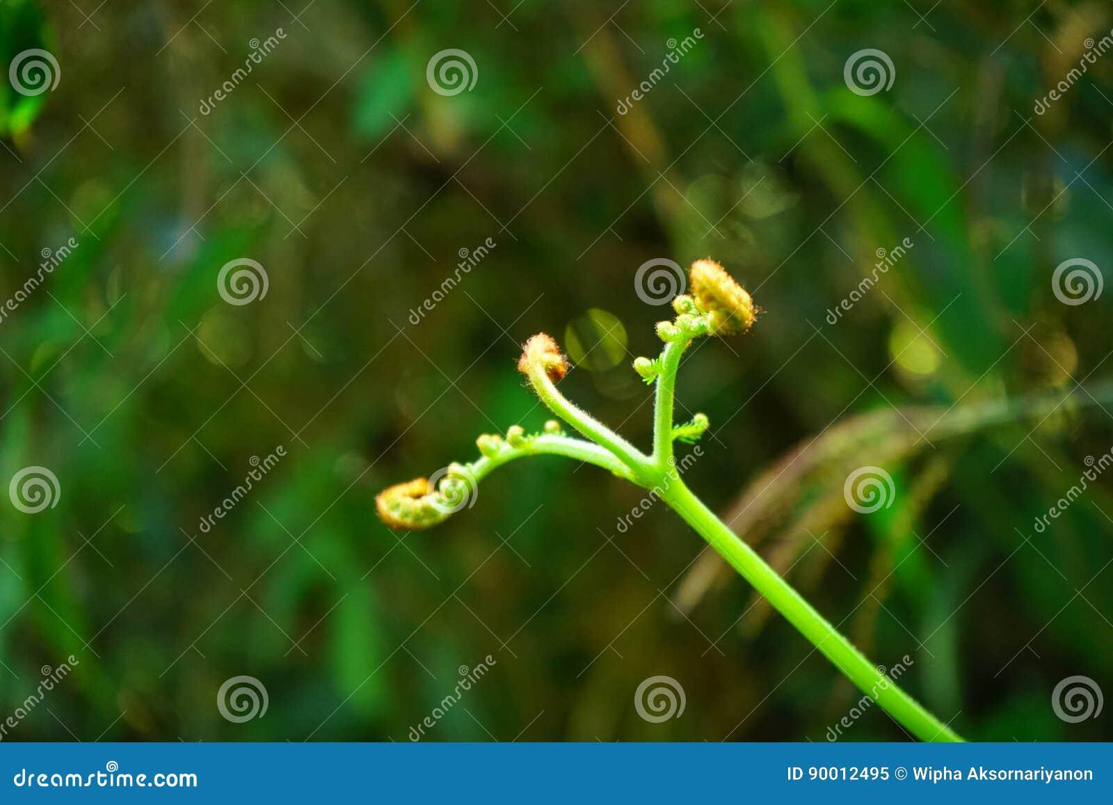 Grön for
