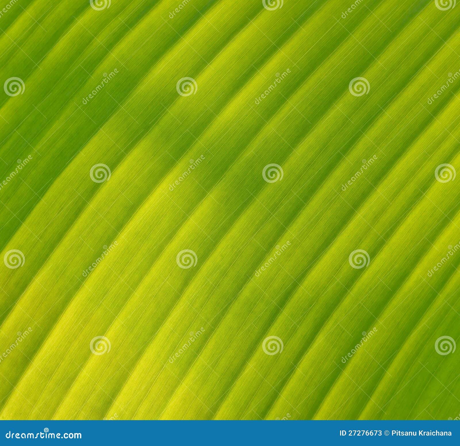 Grön bananleaf
