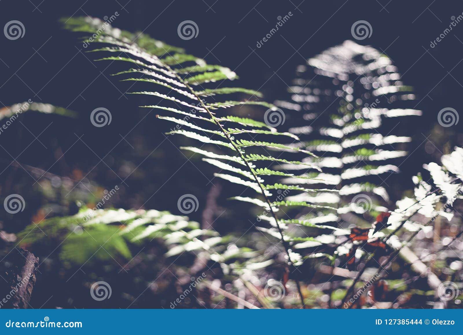 Grön bladormbunke, abstrakt naturlig bakgrund och textur i mörker