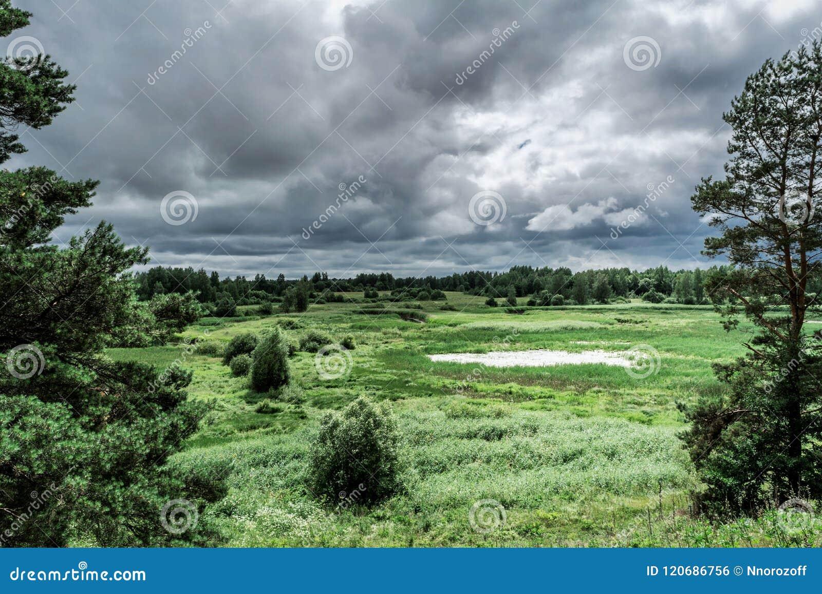 Grön dal med ett naturligt damm, buskar och träd, regnhimmel, tråkig blåsig dag för sommar