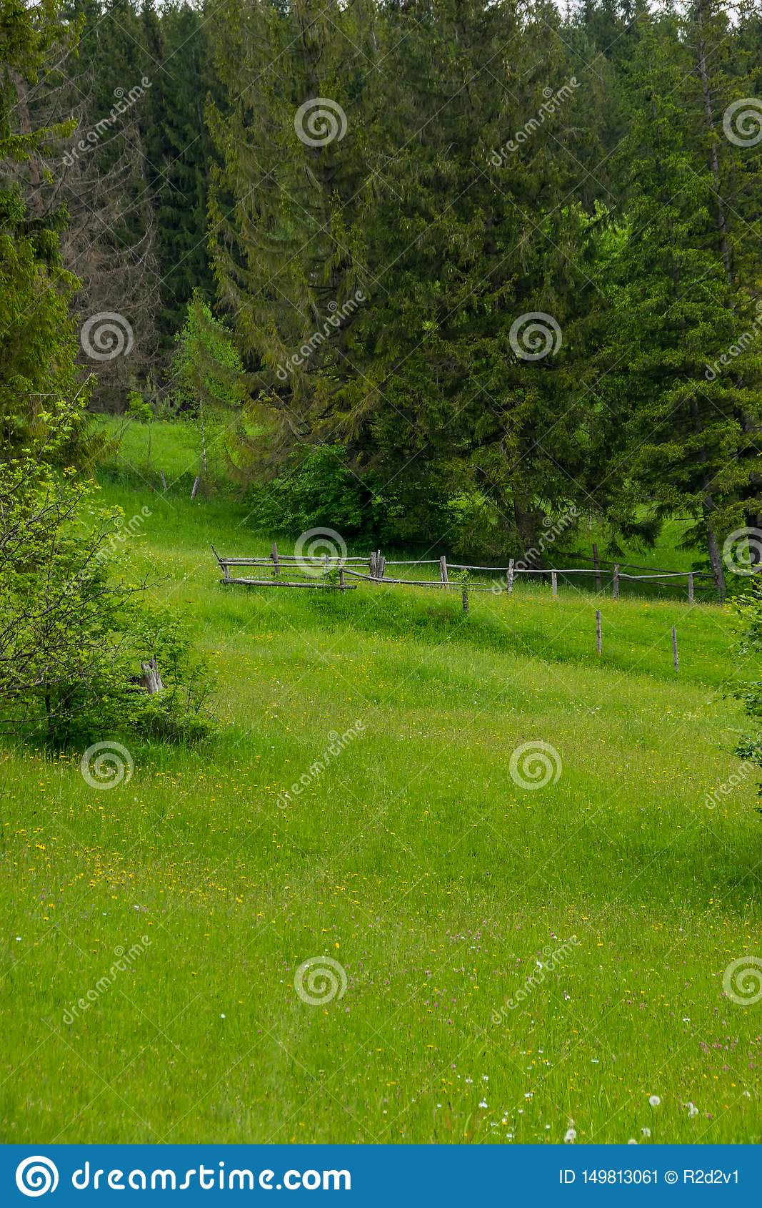 Grön fäktad egenskap i trän