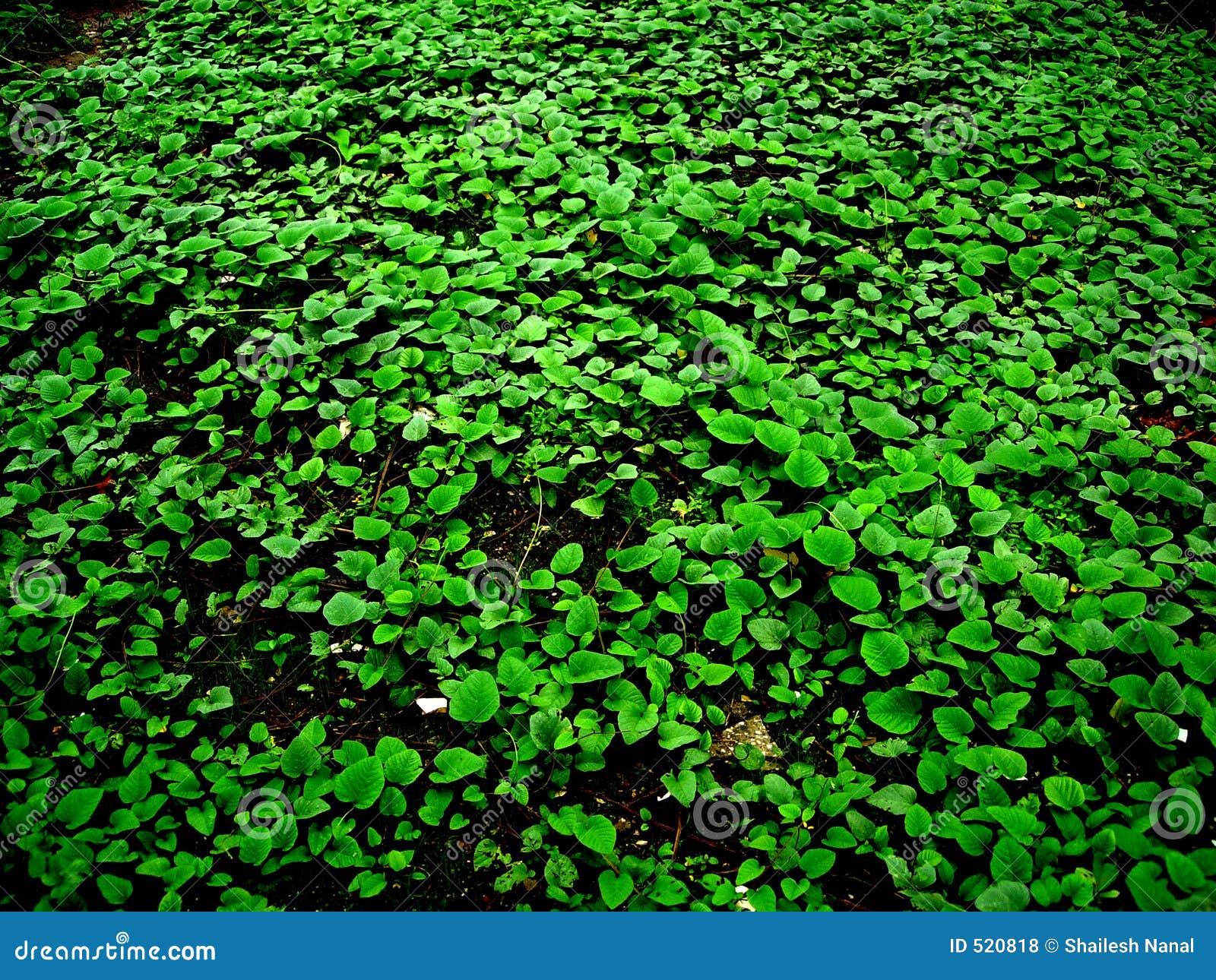 Grön fred
