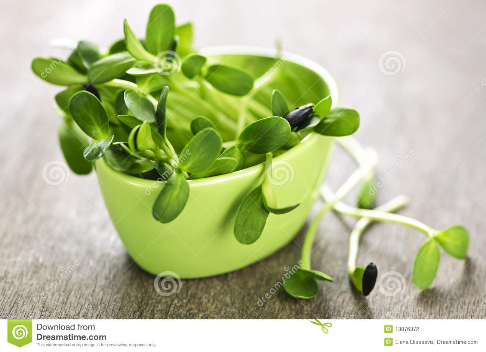 Grön groddsolros för kopp