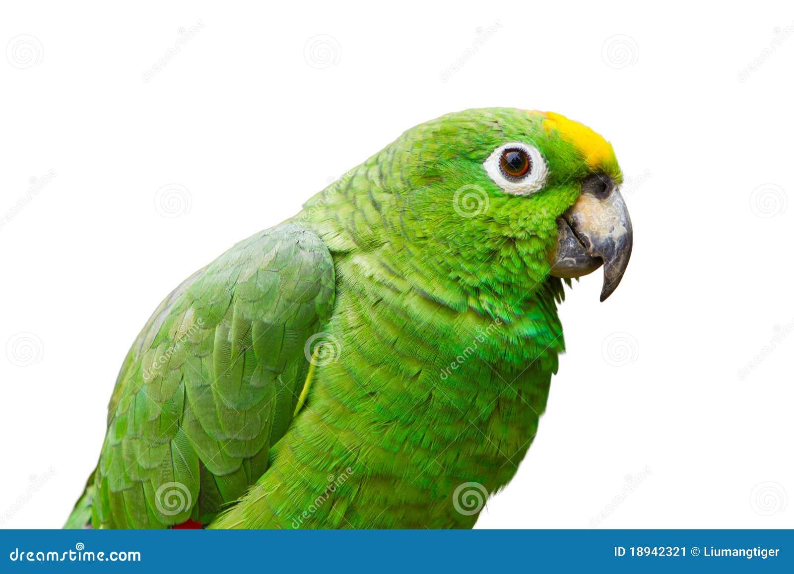 Grön isolerad papegoja 2