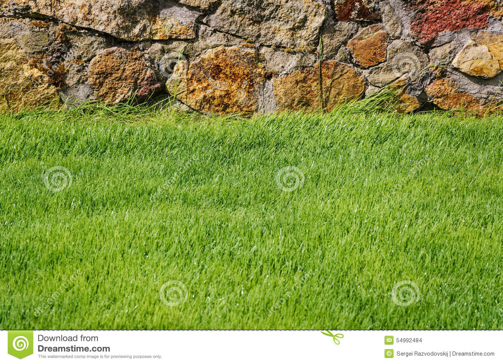 Grön lawn