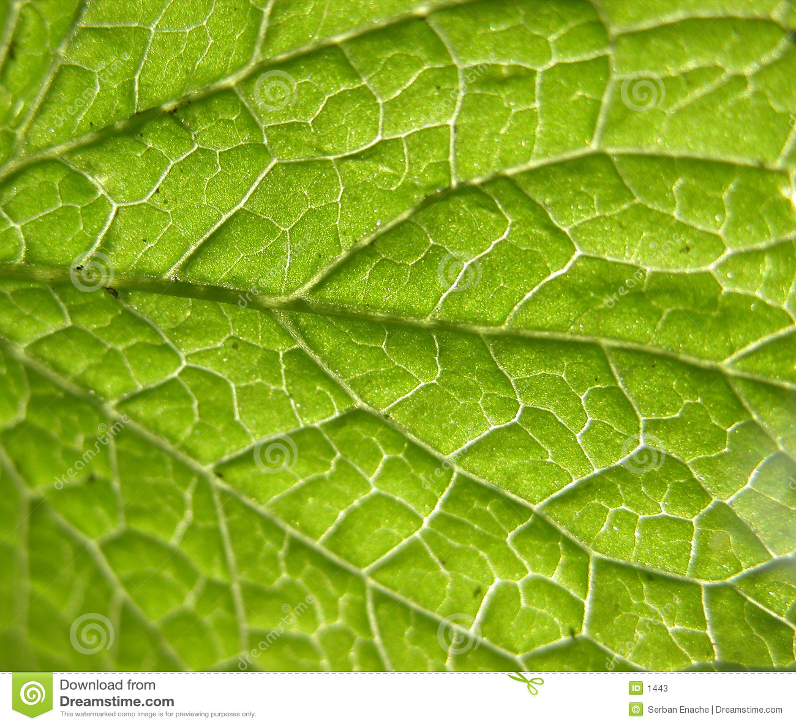Grön leaf för closeup