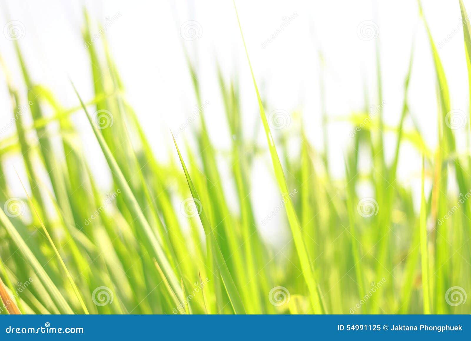 Grön leafbakgrundsabstrakt begrepp