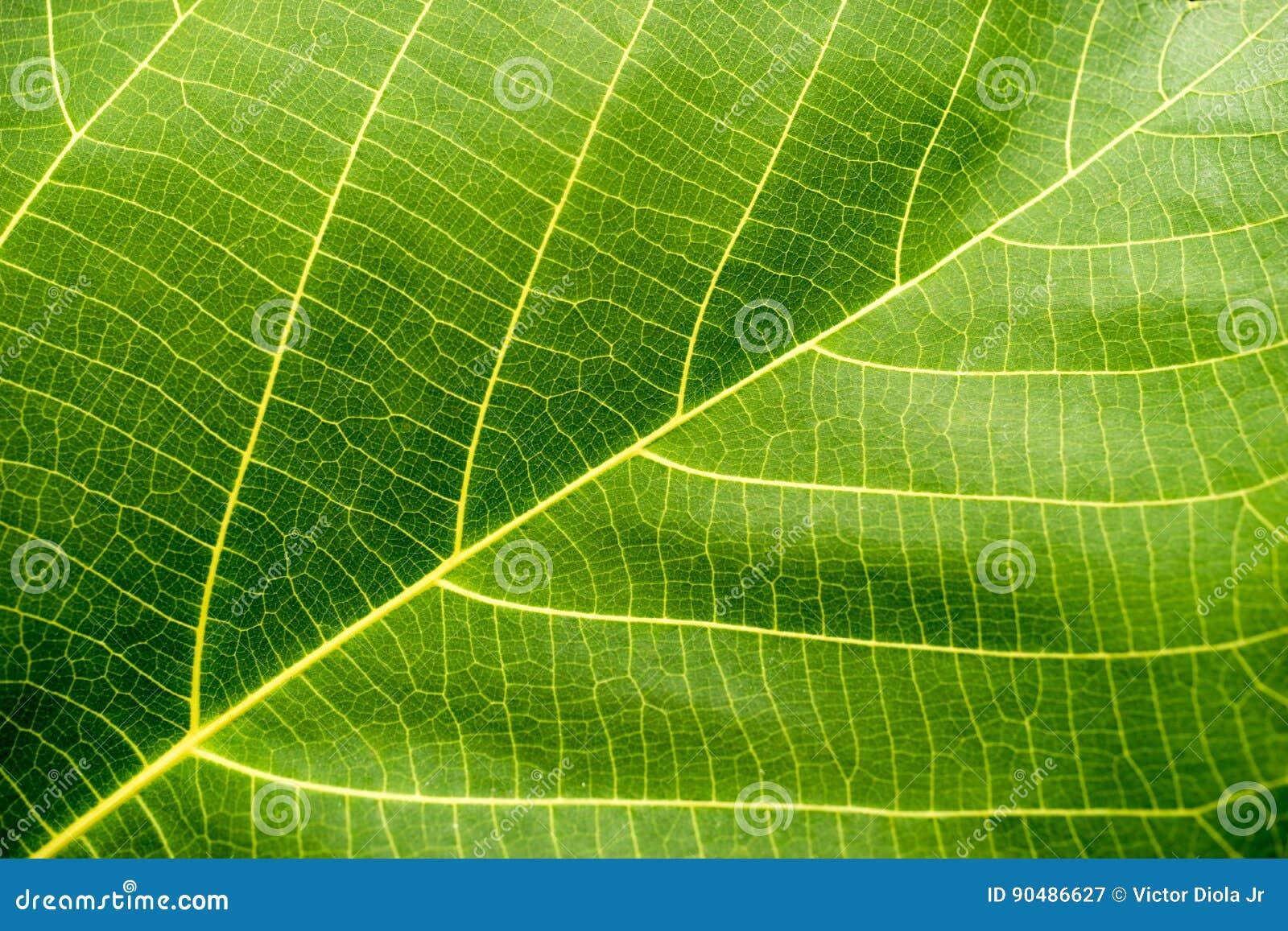 Grön leafmakro