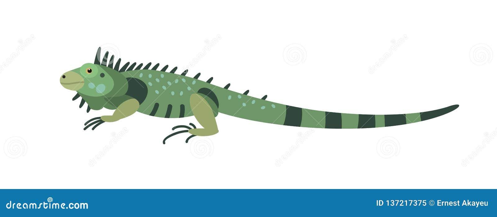 Grön leguan som isoleras på vit bakgrund Ursnyggt köttätande exotiskt djur Härlig lös rov- reptil eller