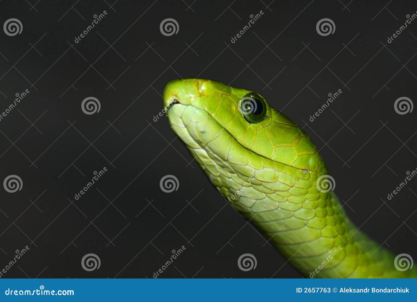 Grön mamba