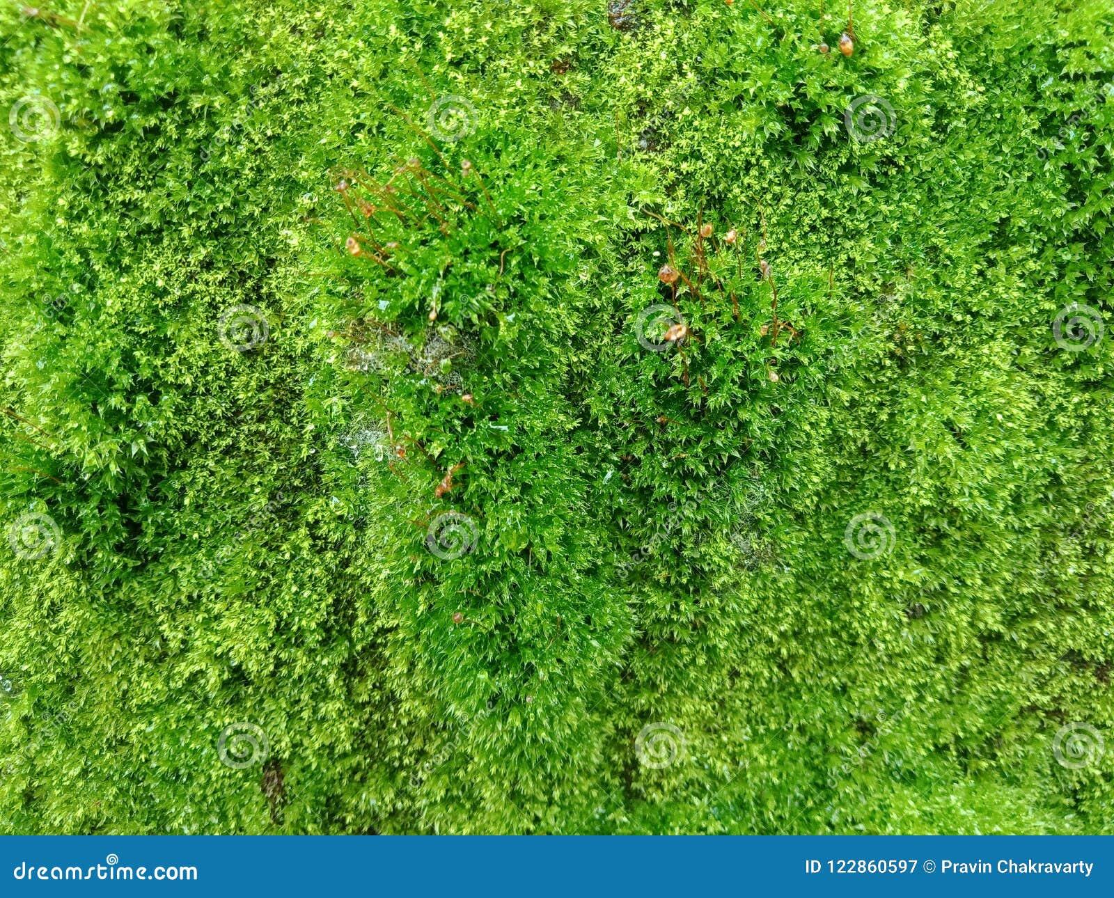 Grön mossa med textur, texturerad bakgrundstapet