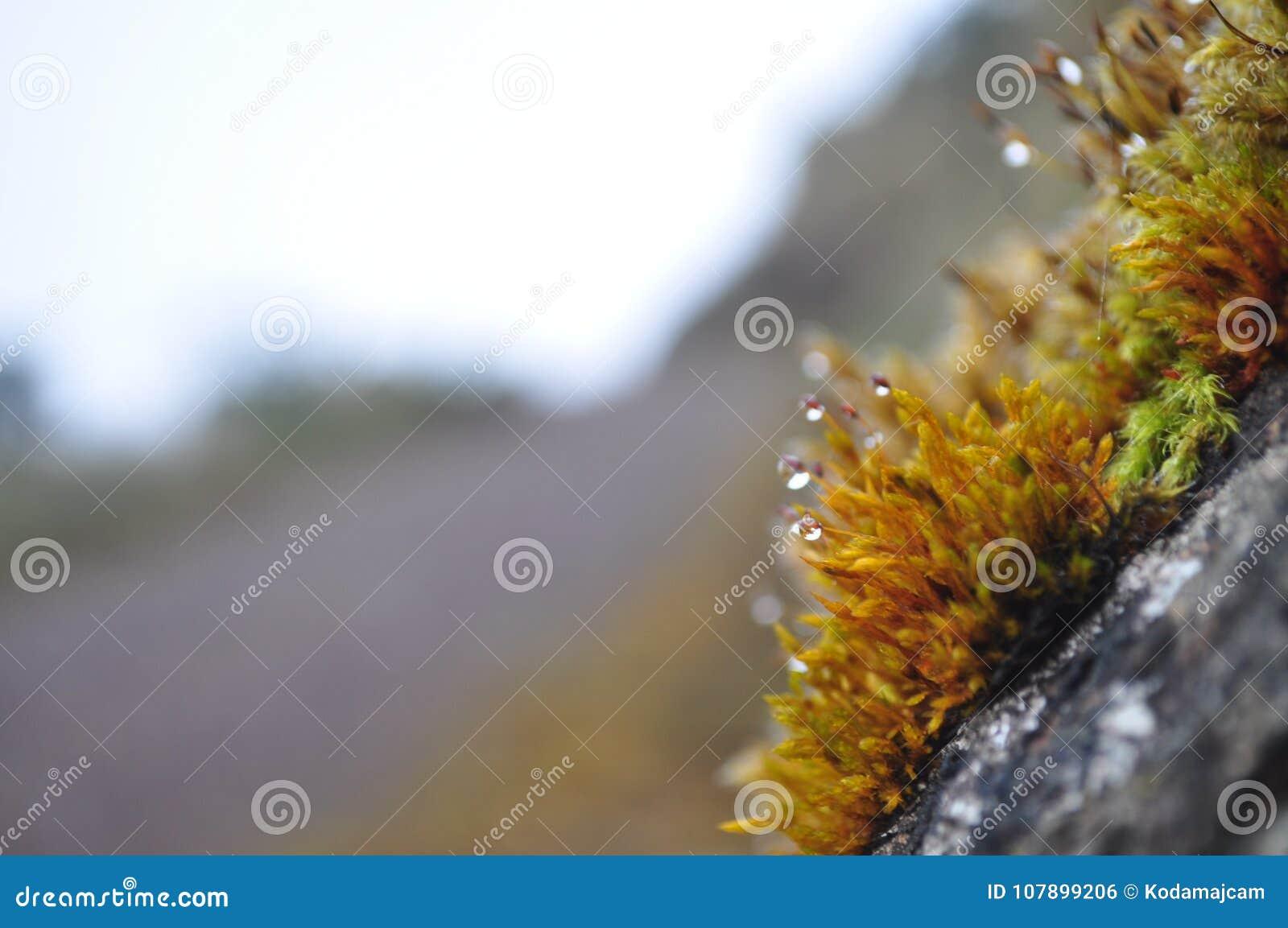 Grön mossa och dagg på en vagga