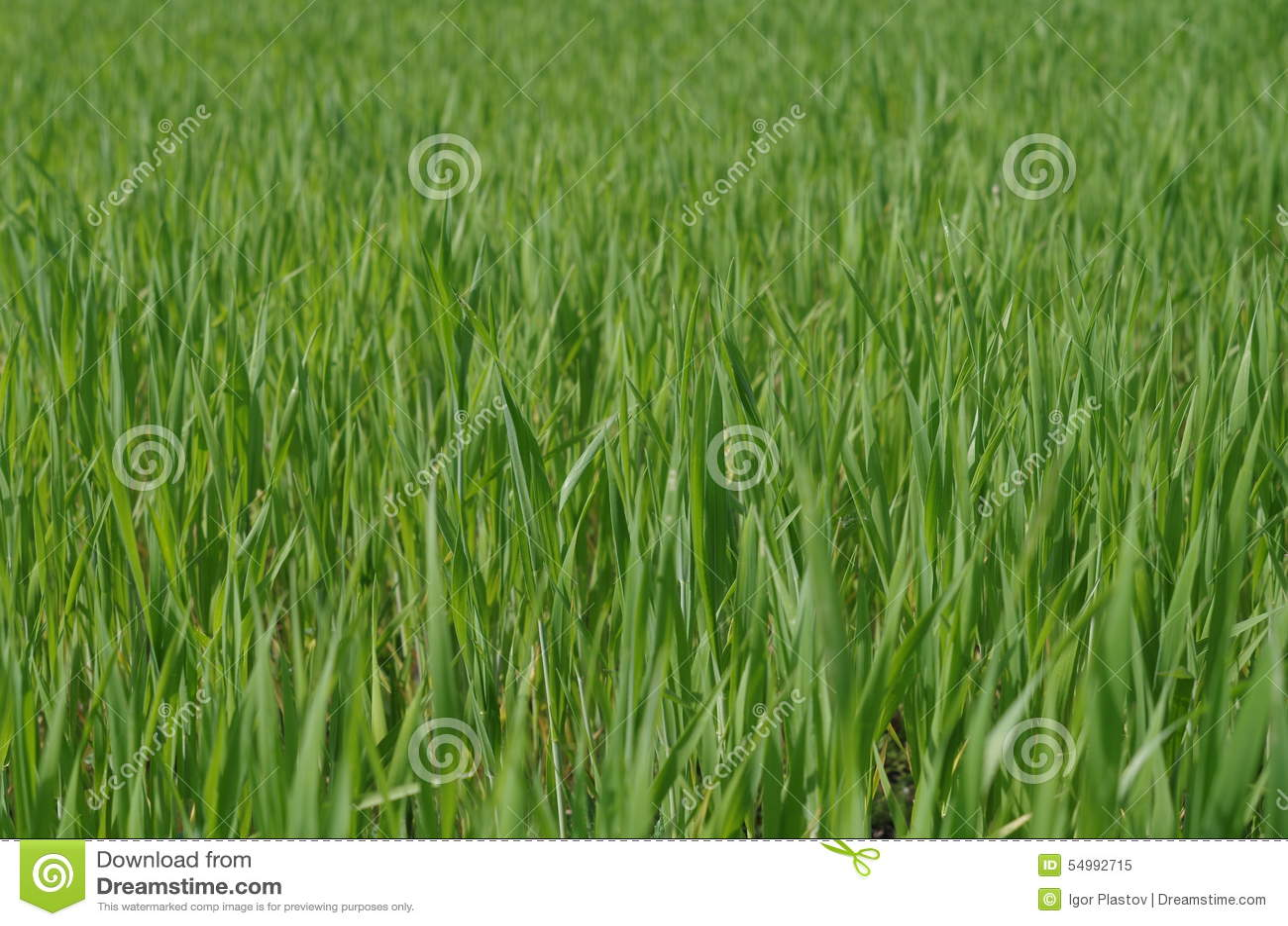 Grön ny gräscloseup