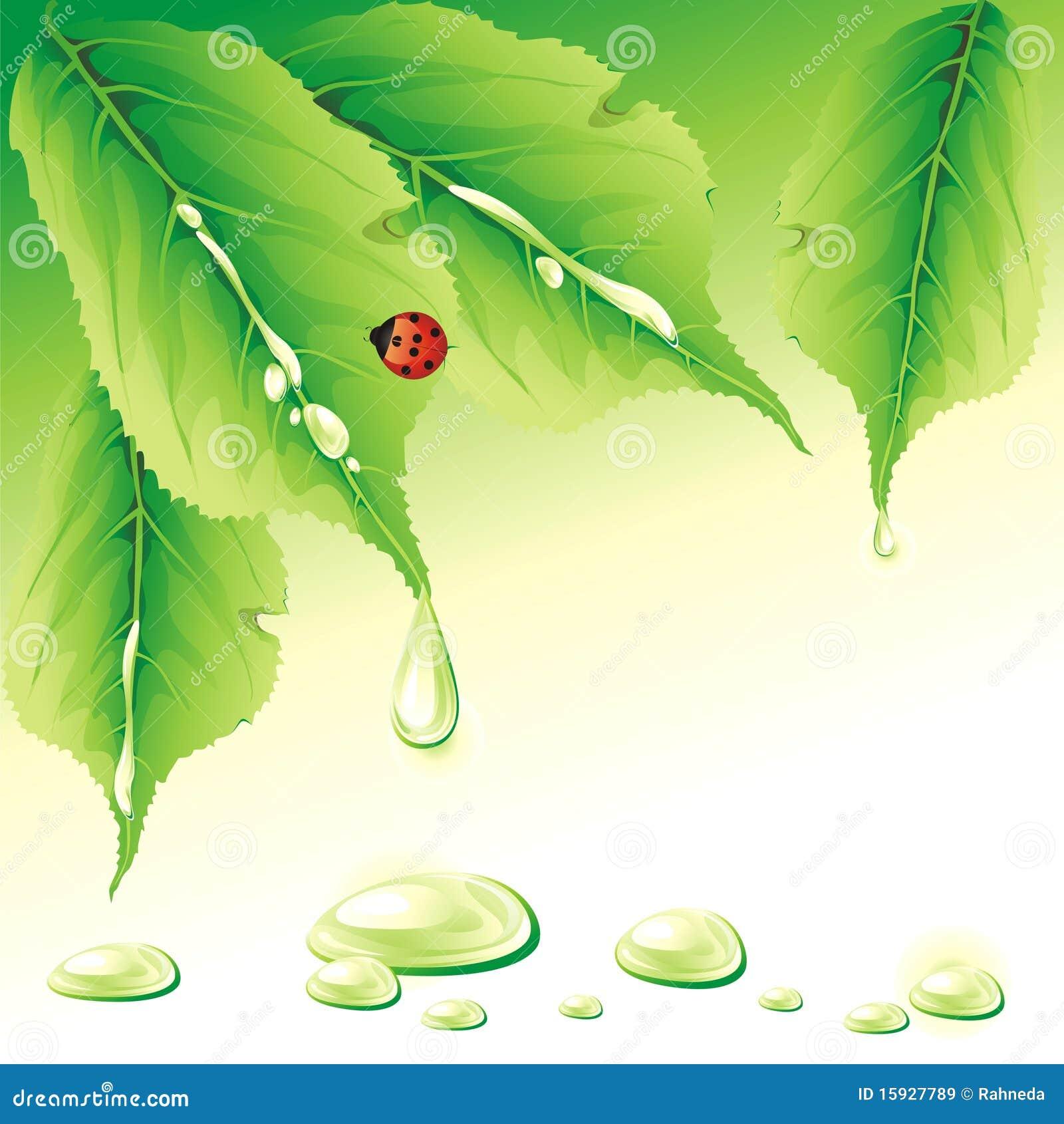 Grön nyckelpiga för bakgrund