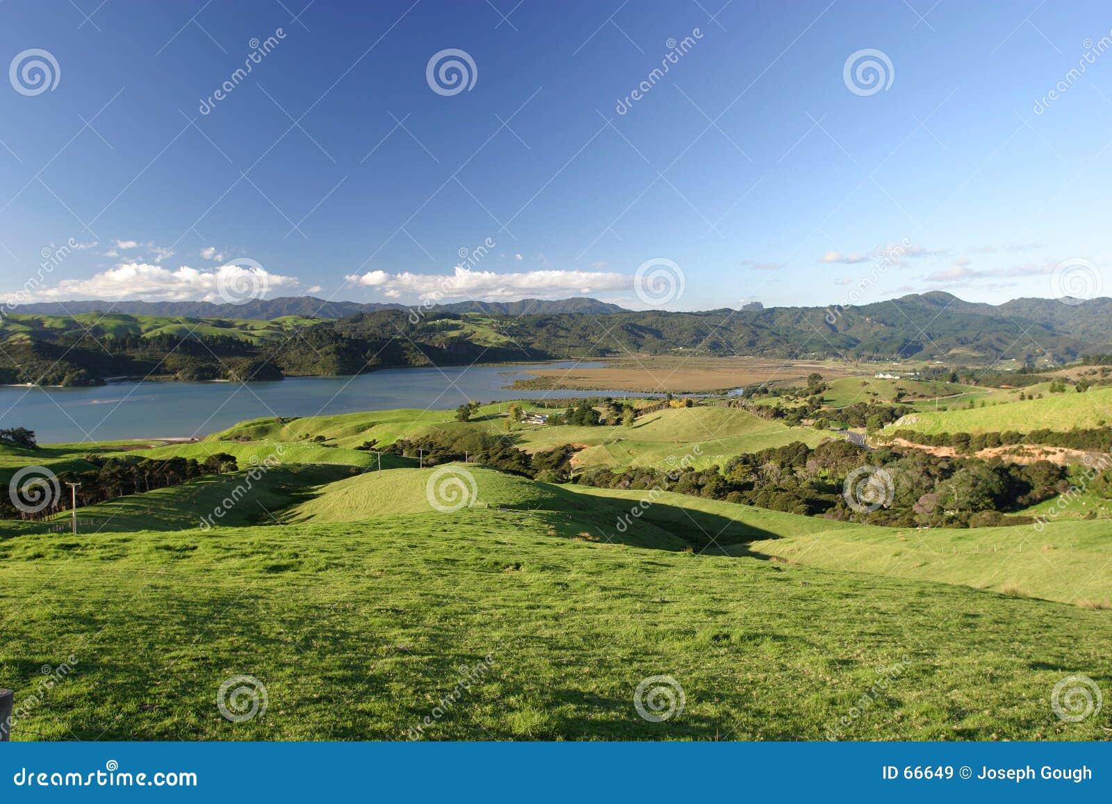 Grön pastureland