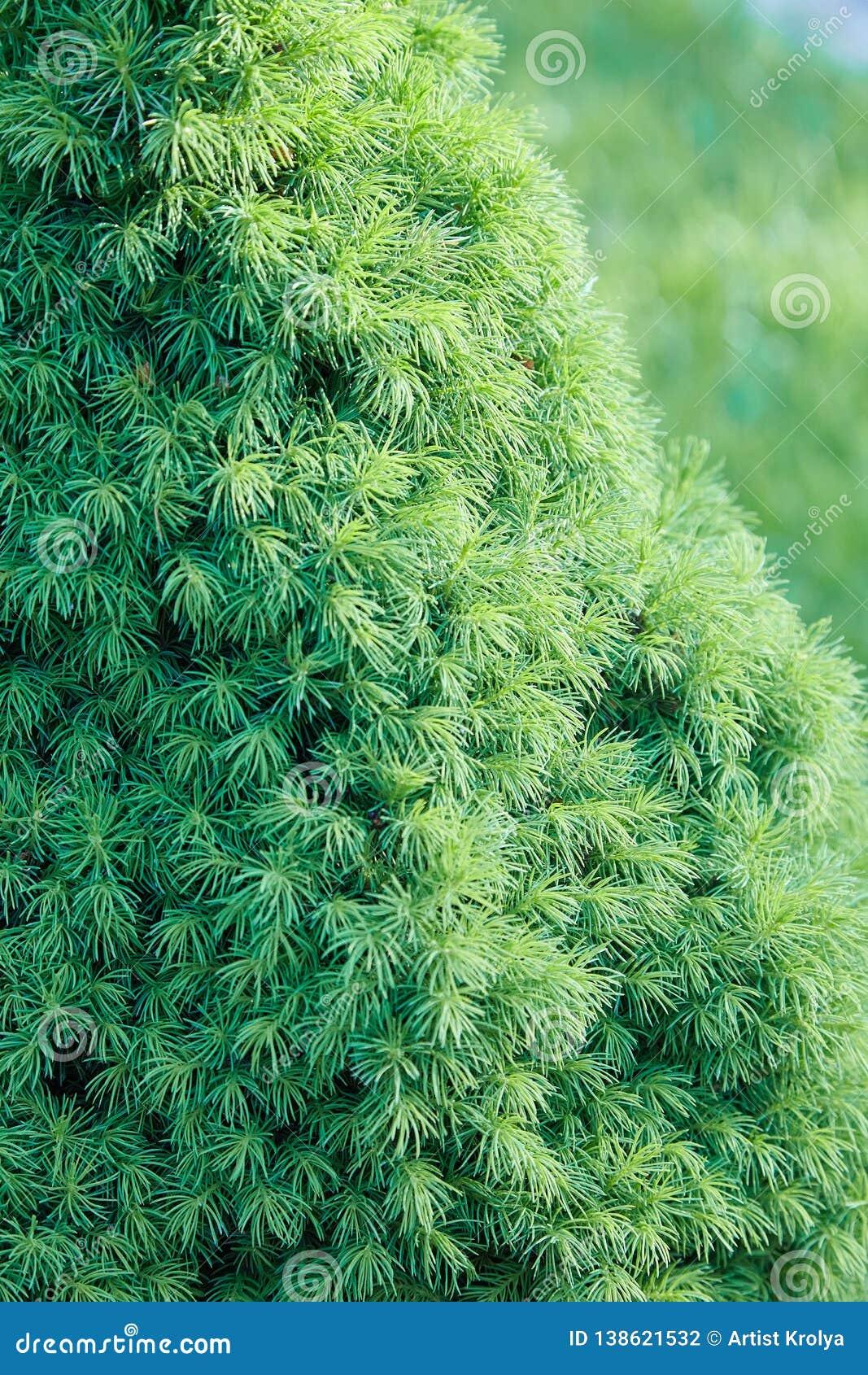 Grön prydlig groving i trädgården utomhus
