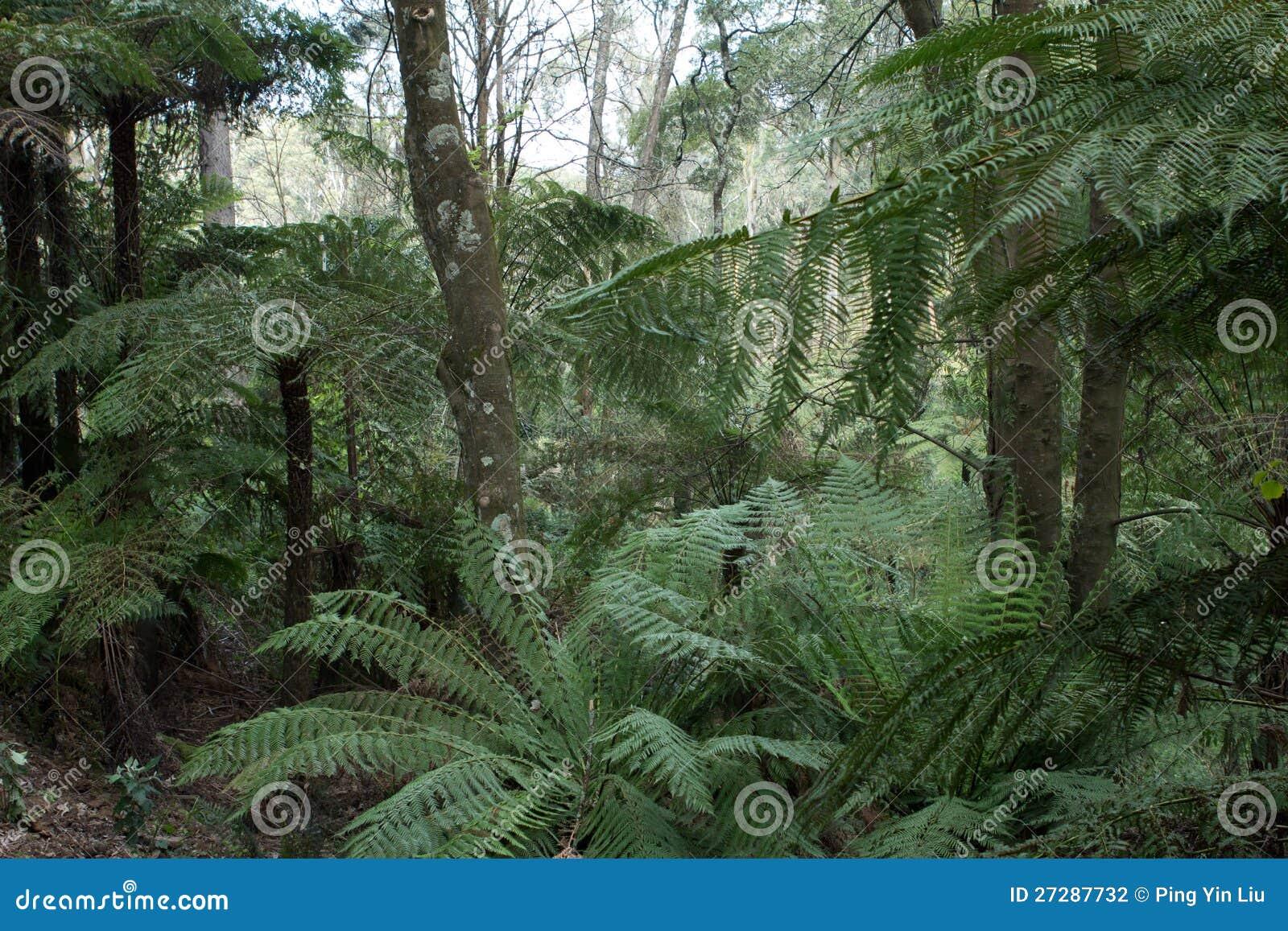 Grön skog