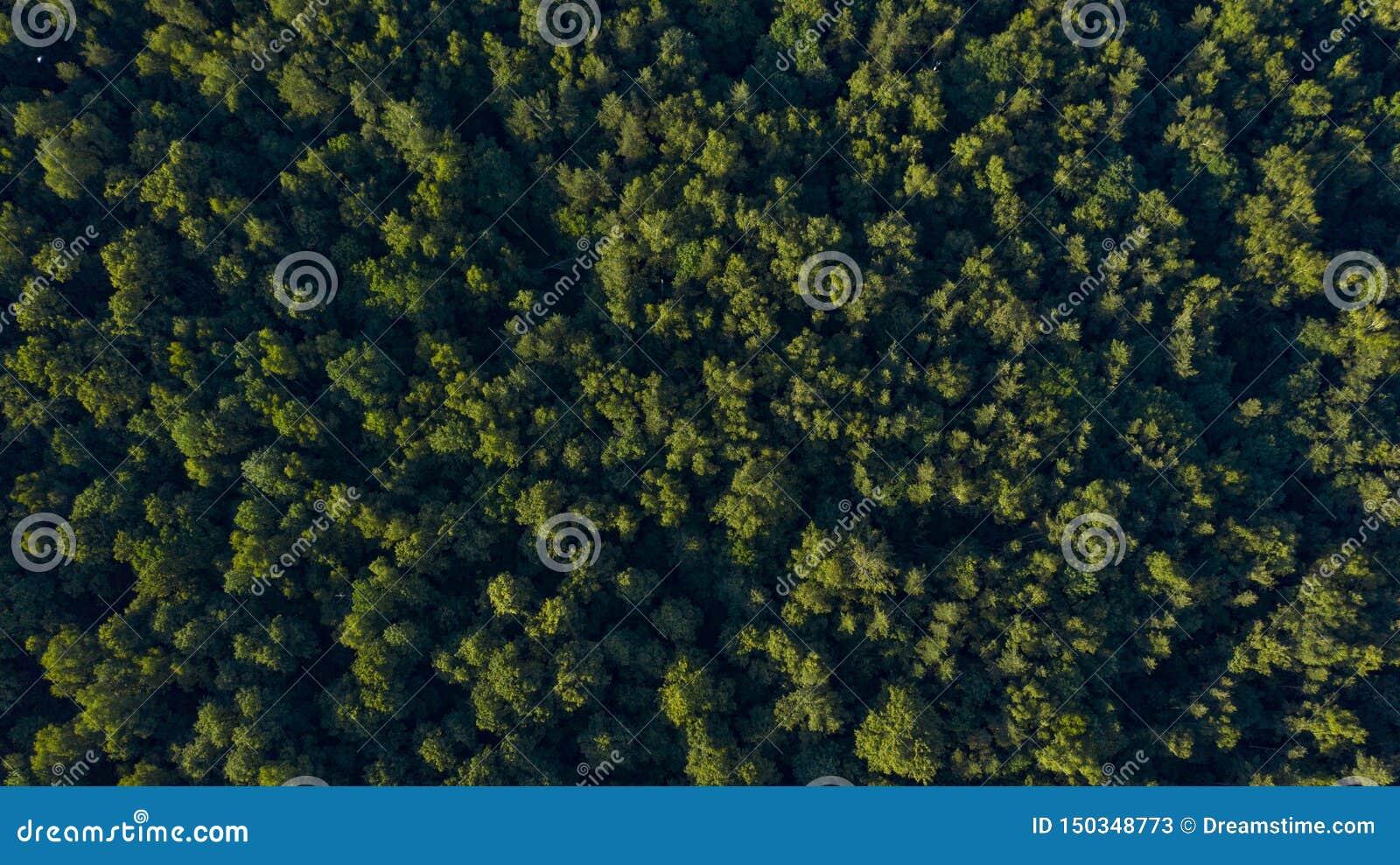 Grön skog på solnedgången, över huvudet sikt
