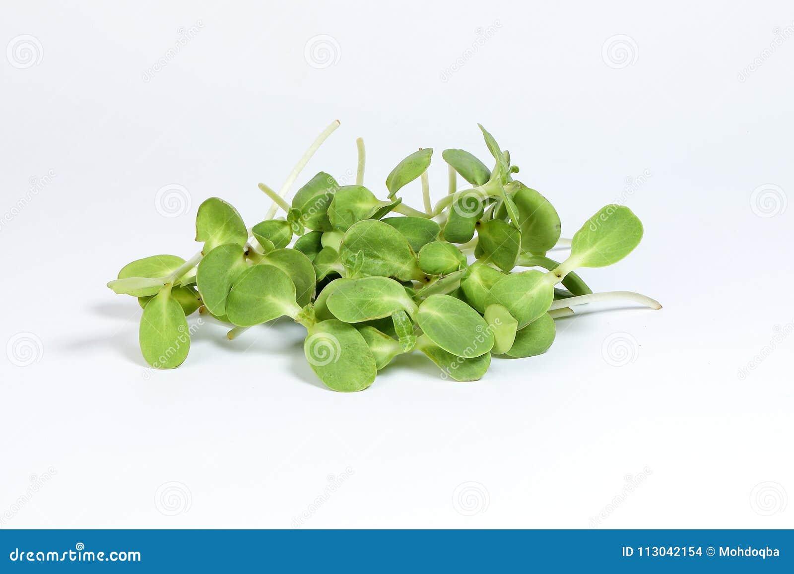 Grön solrosgrodd