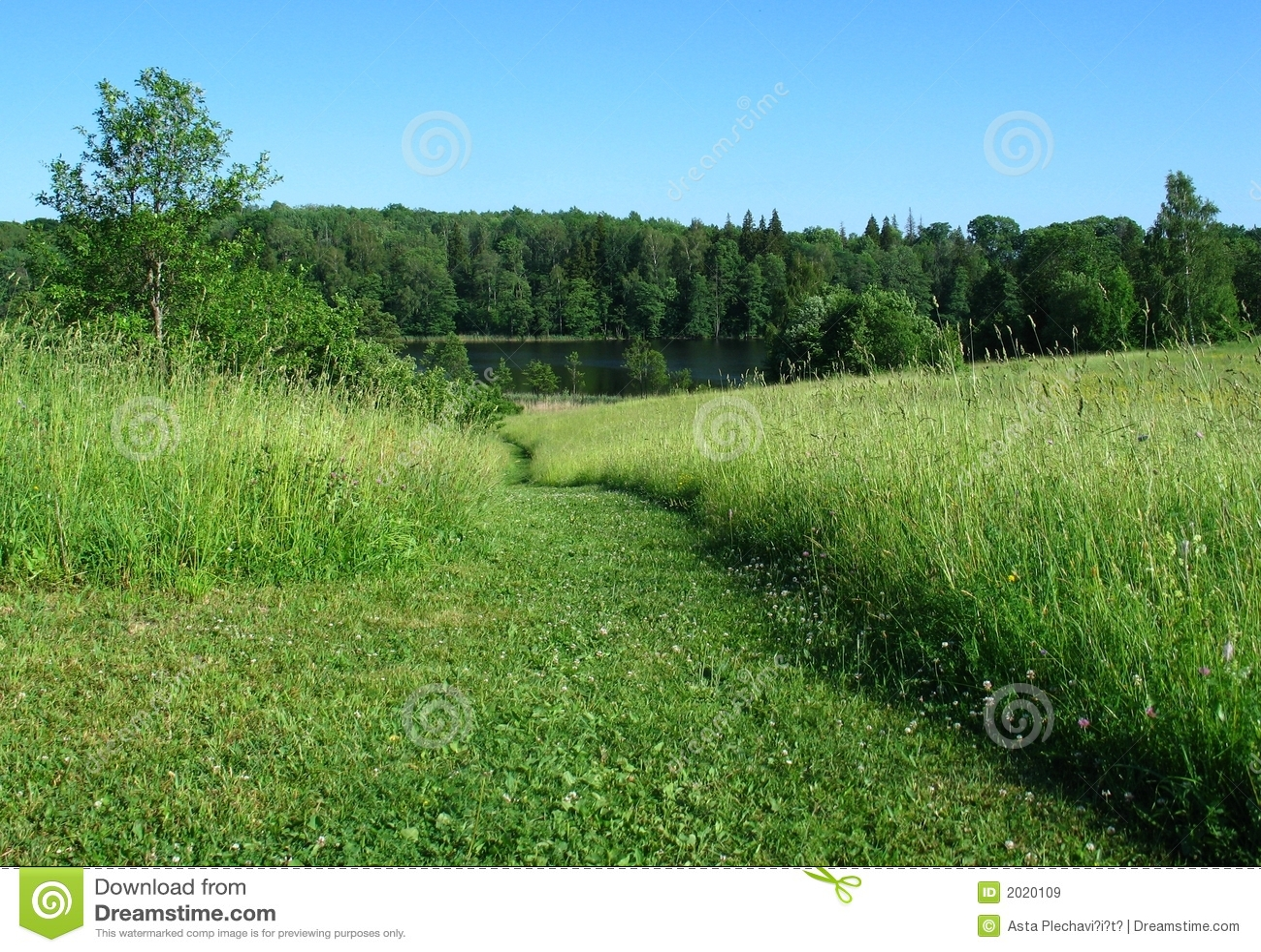 Grön sommar