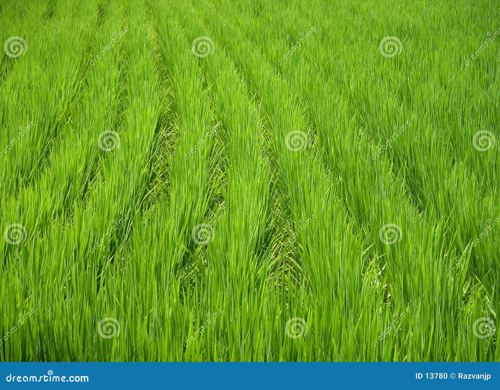 Grön textur