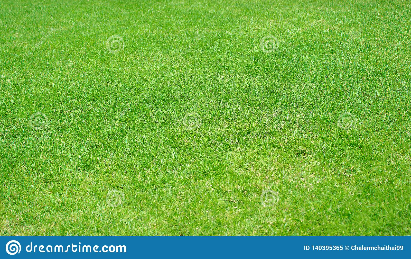Grön texturerad bakgrund för gräsmatta modell, nytt grönt manicured gräsmattaslut upp
