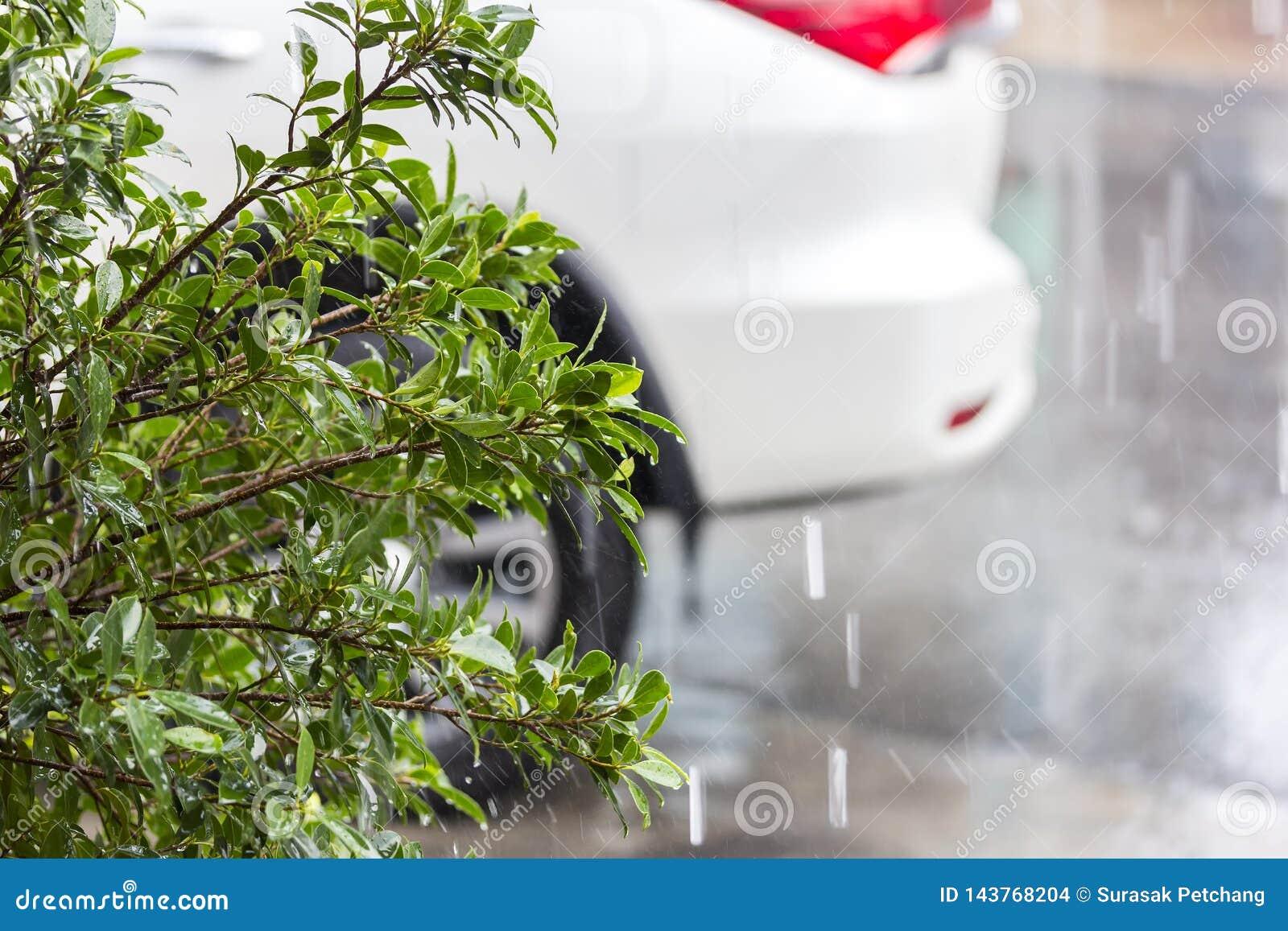Grön trädbuske under regna och suddighetsbilbakgrund på parkeringsplatsen