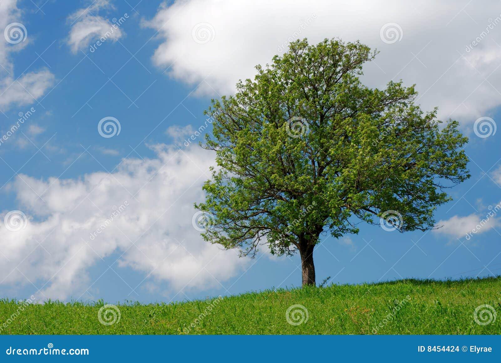 Grön tree för fält
