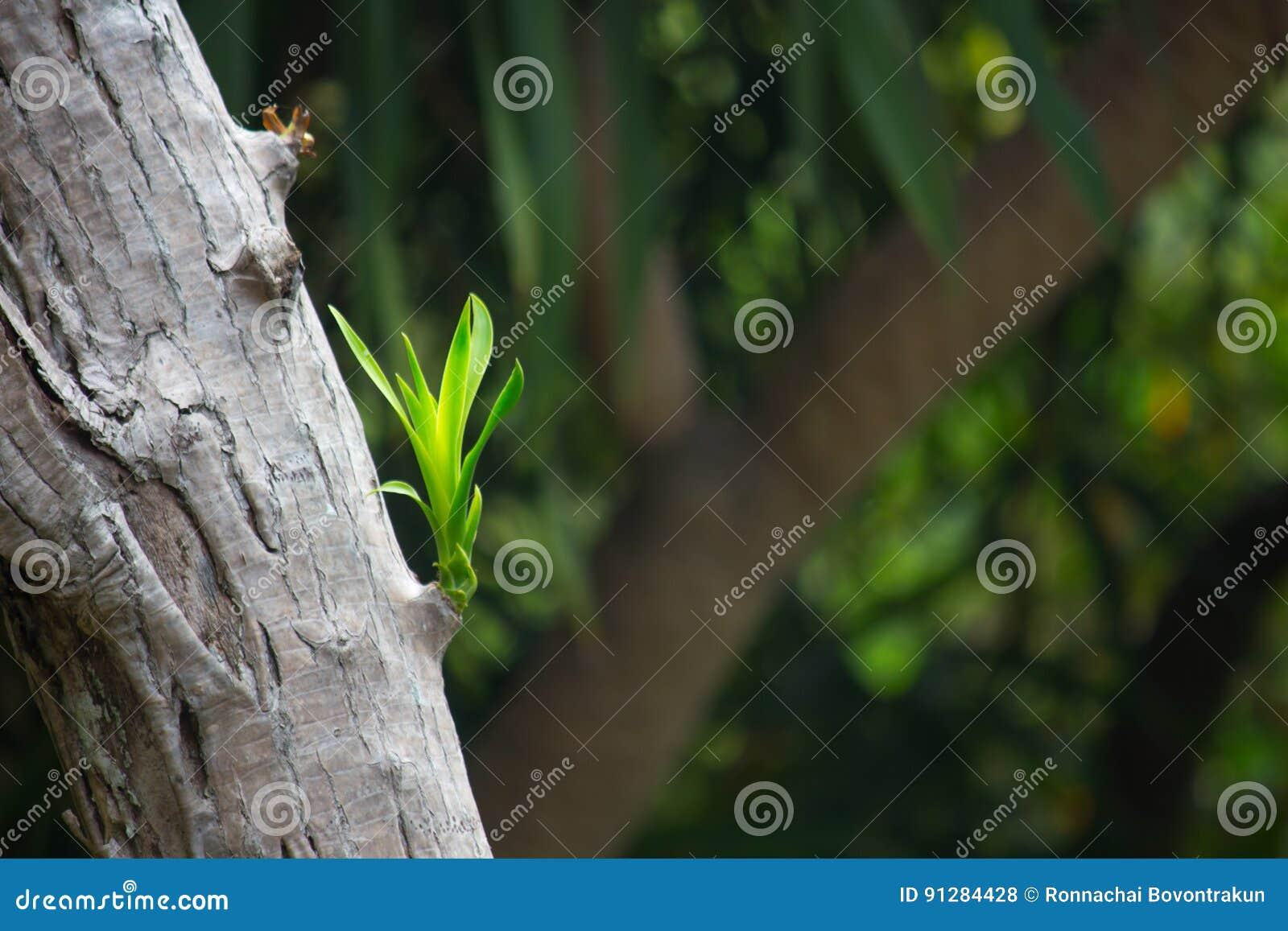 Grön växande fors