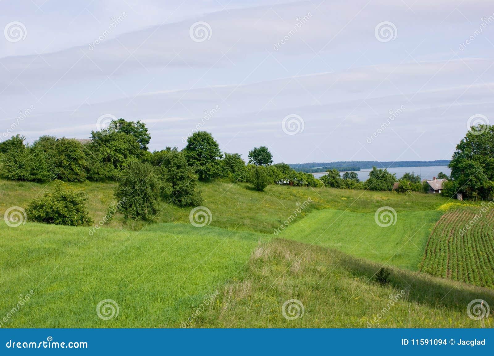 Grön wigry lakeliggande för fält