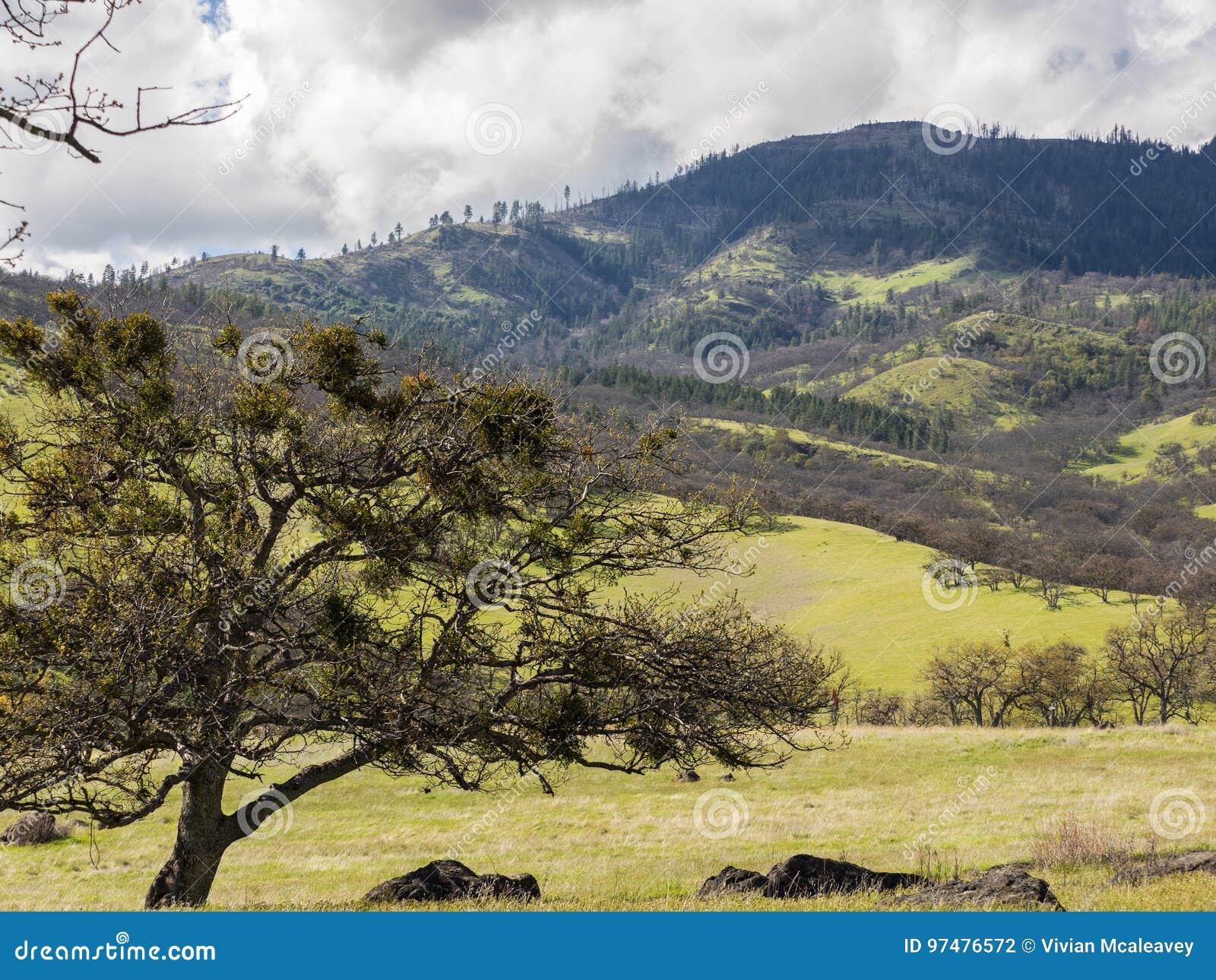 Gröna ängar på berg med ekar