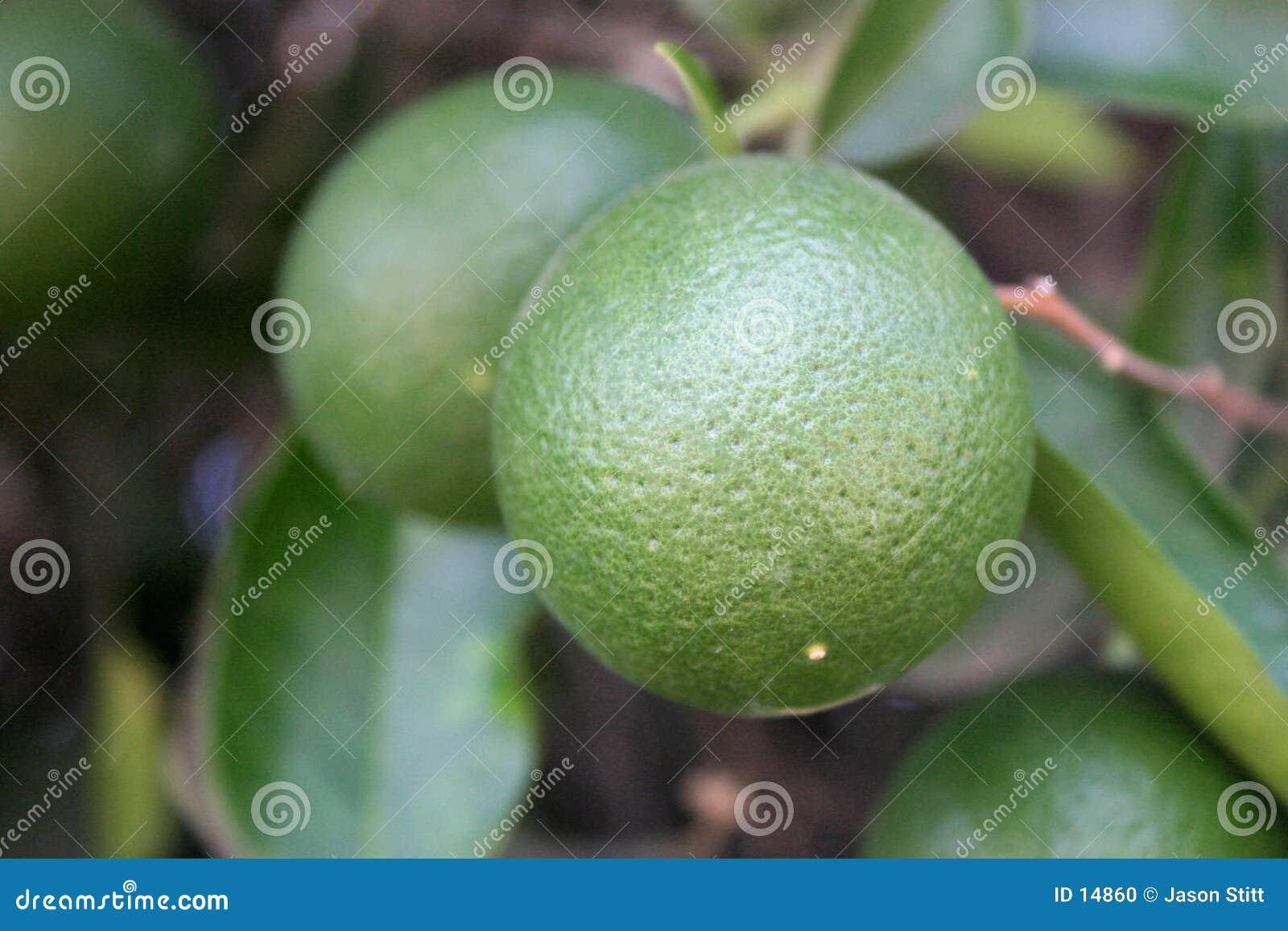 Gröna apelsiner