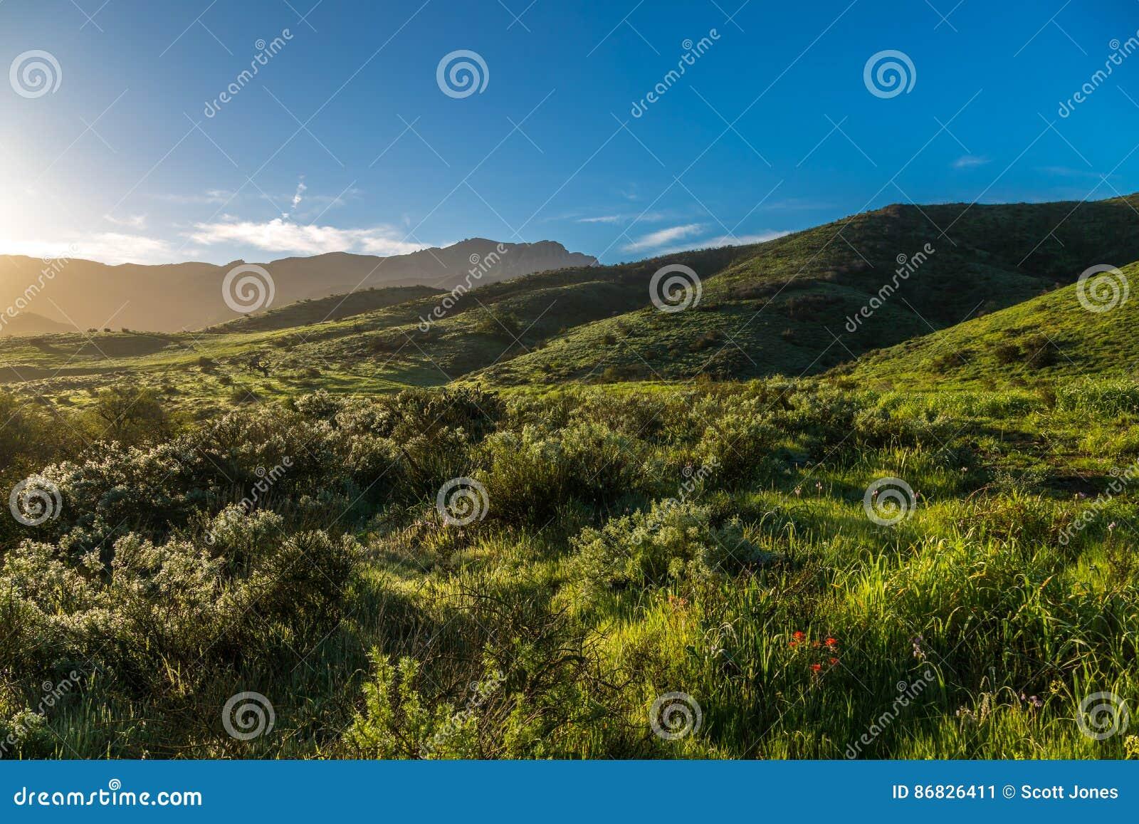 Gröna kullar efter regnet