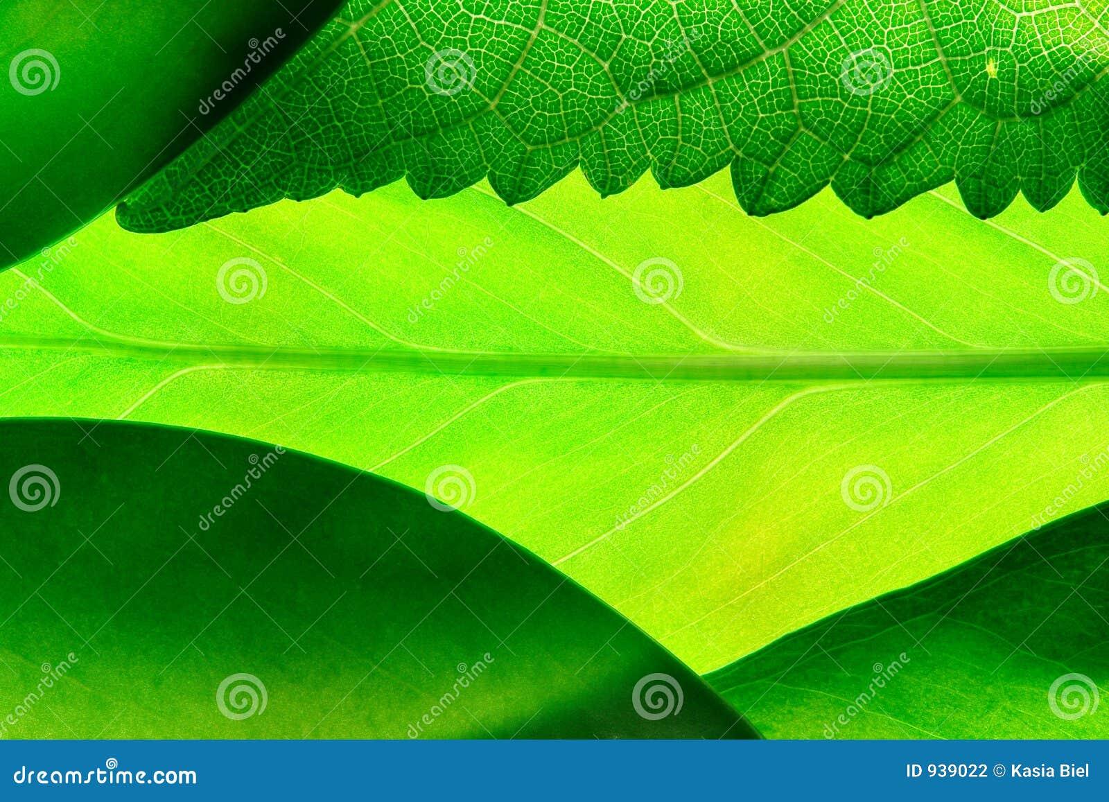 Gröna leafs
