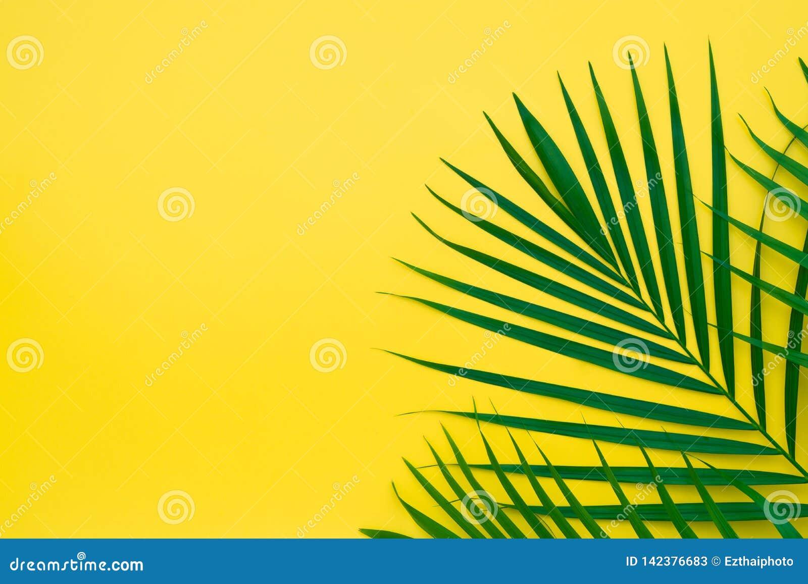 Gröna sidor av palmträdet på gul bakgrund Plan lekmanna- minsta naturstil av tropiska palmblad på gul bakgrund