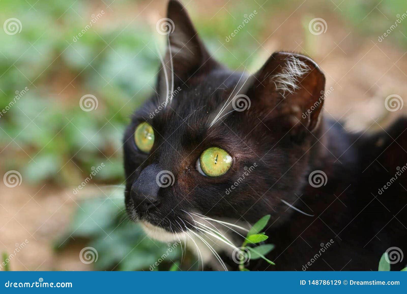 Gr?na synade Cat Found i bergen
