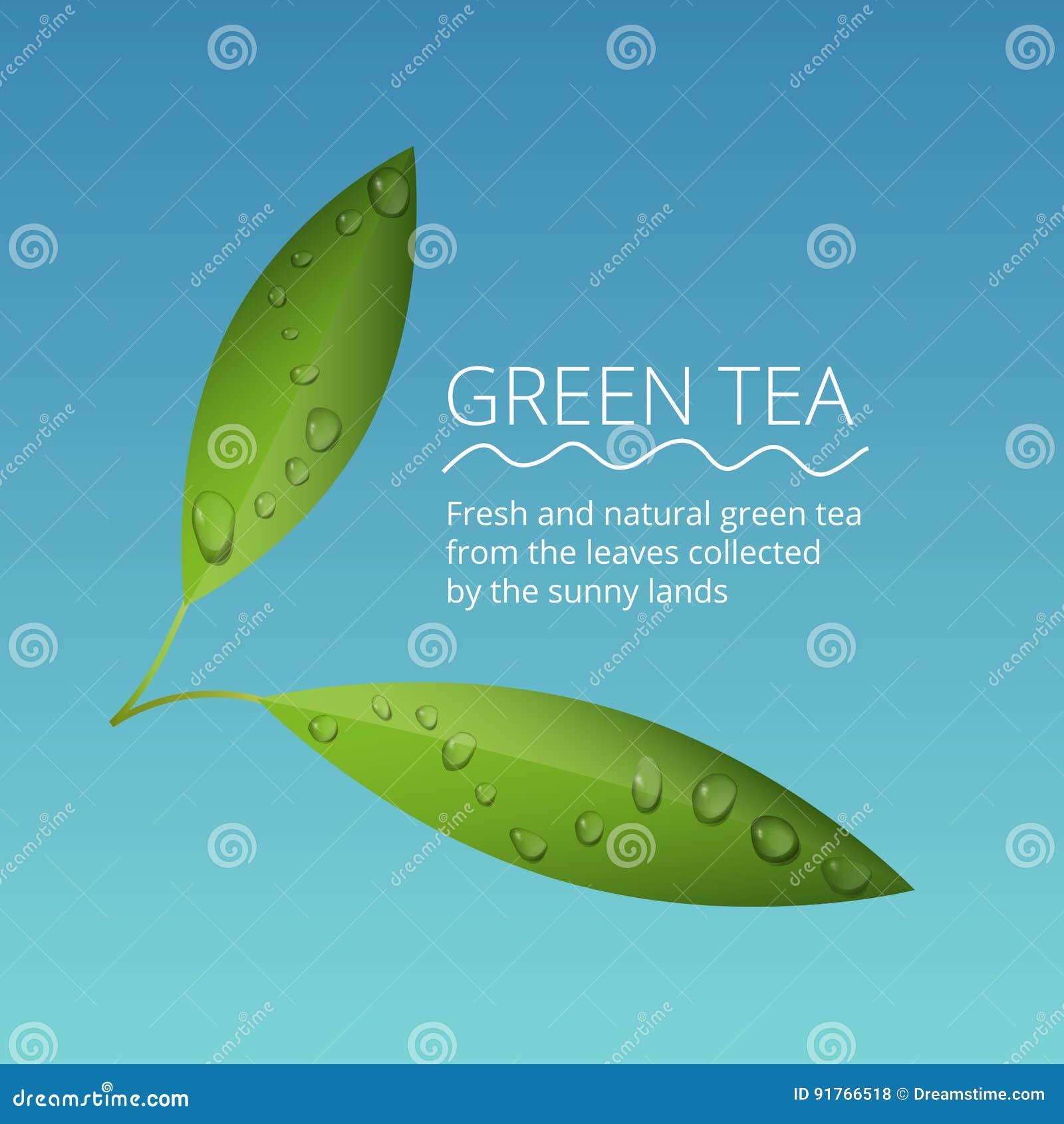 Gröna teblad med vatten tappar vektorillustrationen